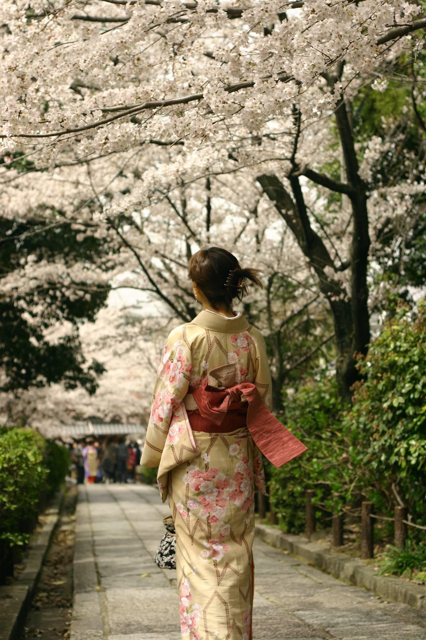 京都&きもの&さくら