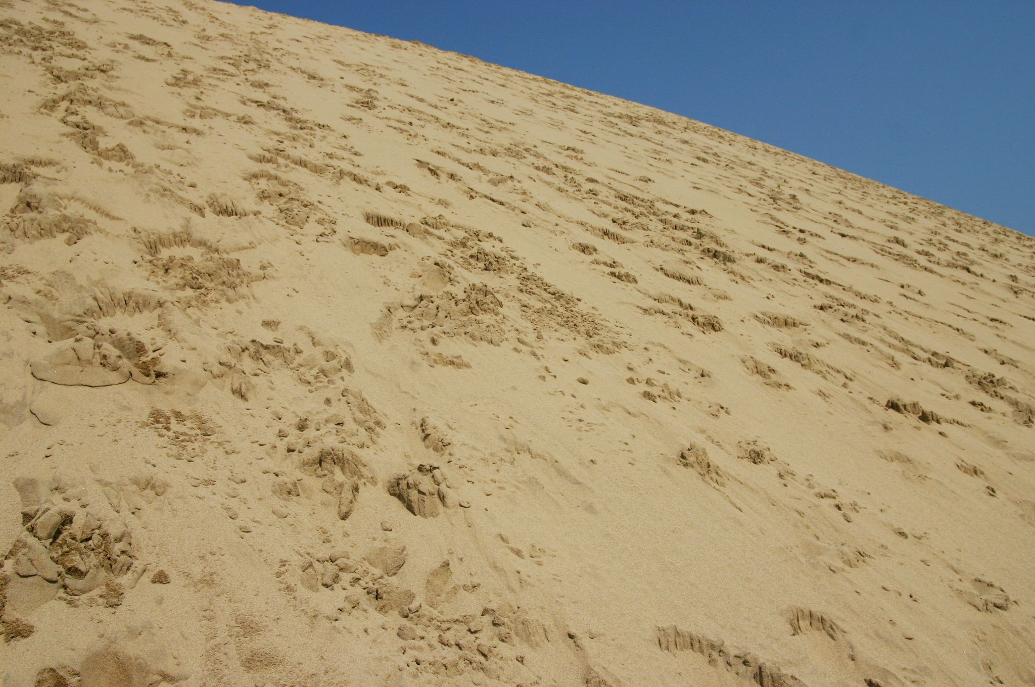 鳥取砂丘の足跡