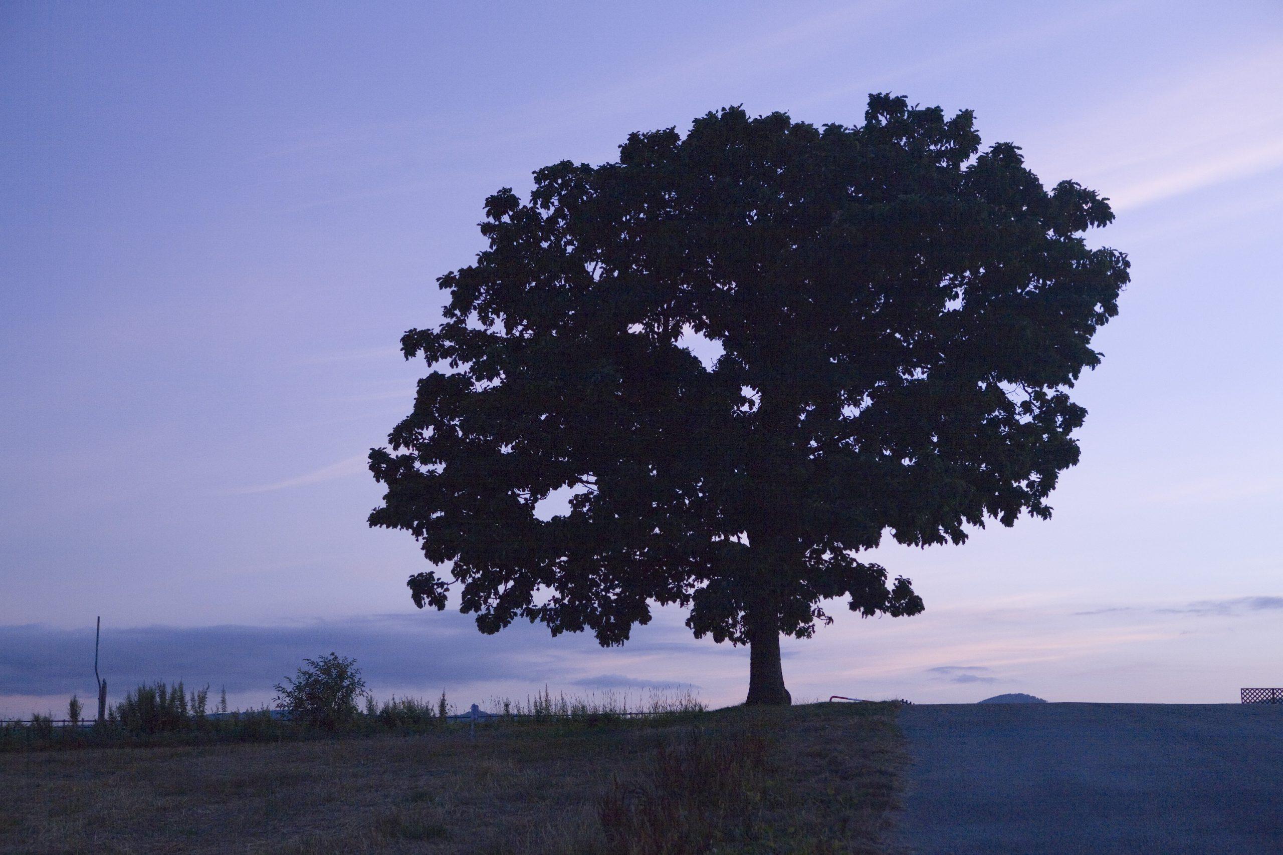 夜の帳が落ちるセブンスターの木