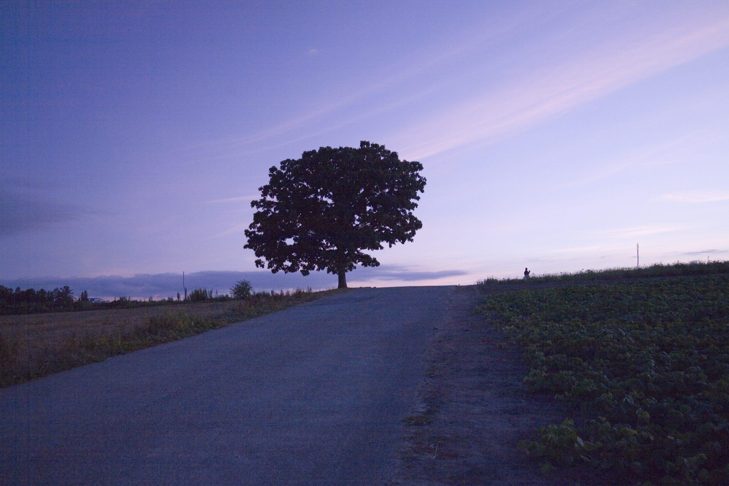 セブンスターの木の夕暮れ