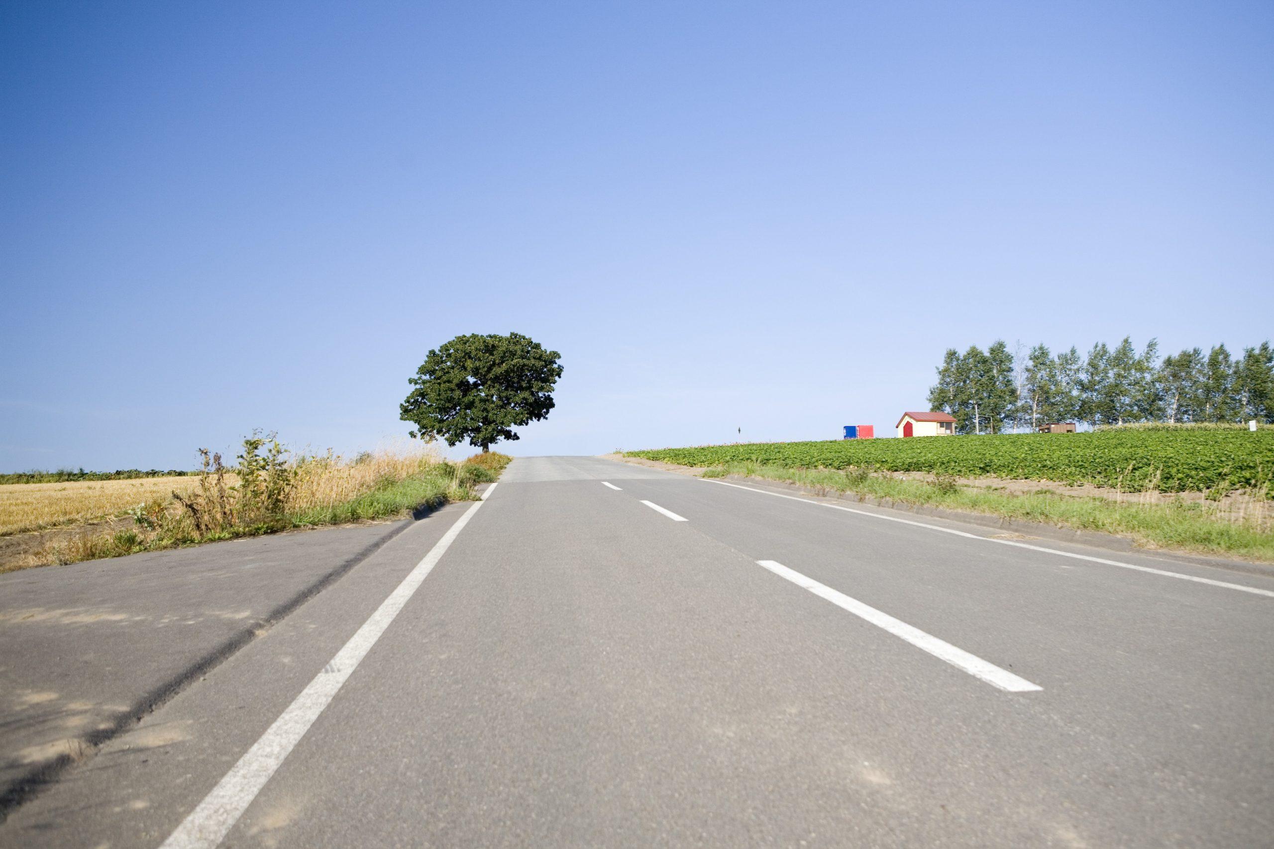 道路とセブンスターの木