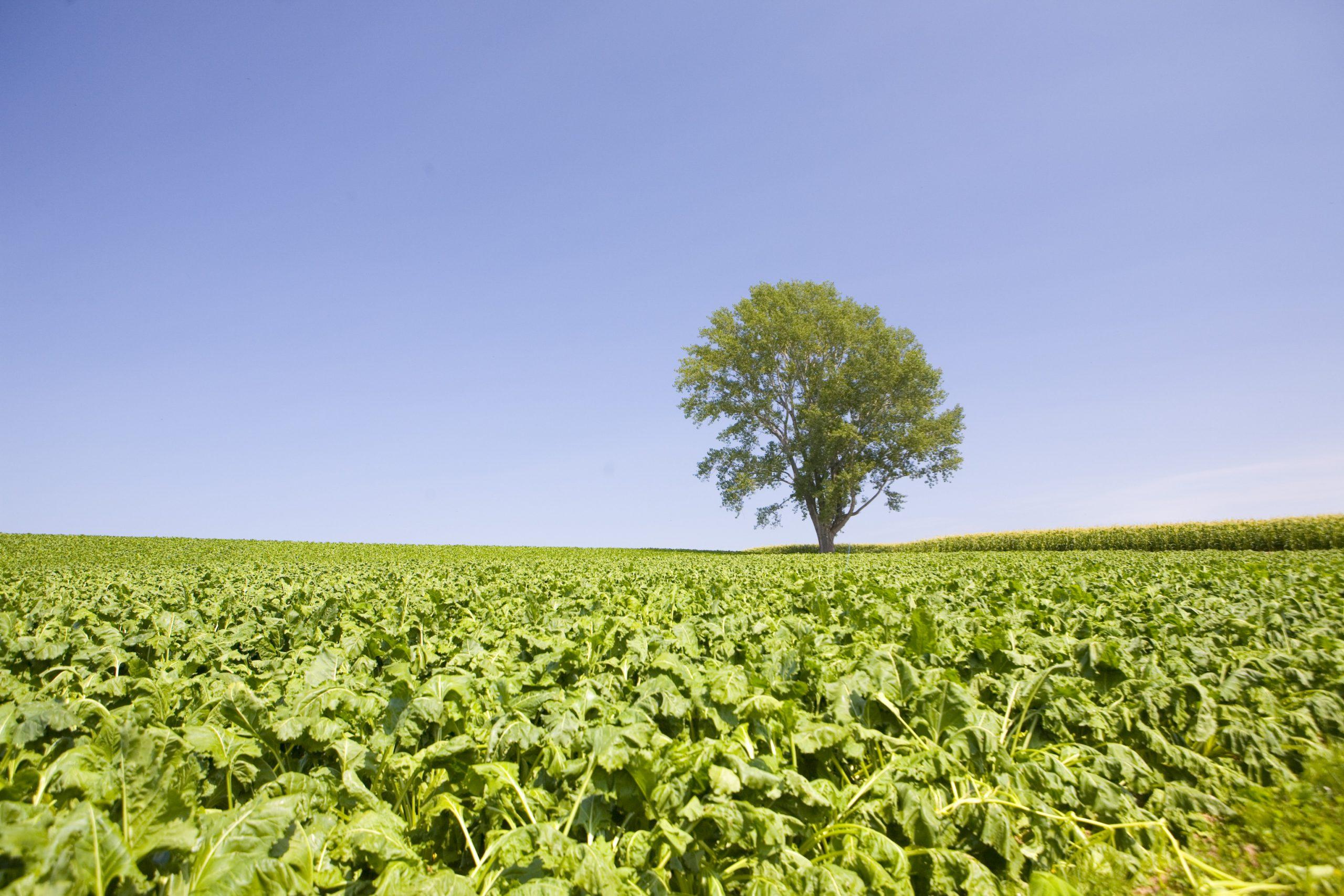 畑と哲学の木