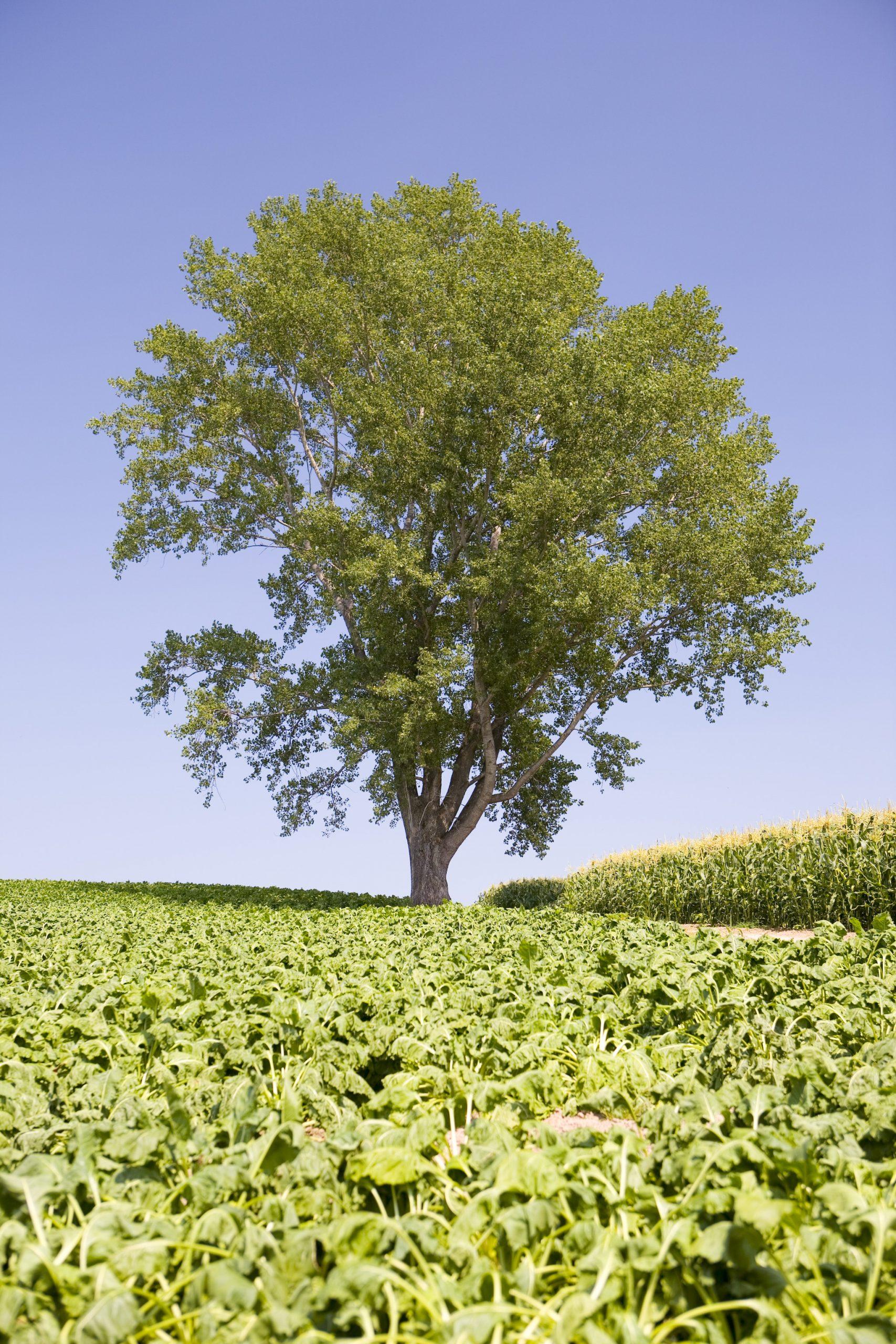 哲学の木を縦で