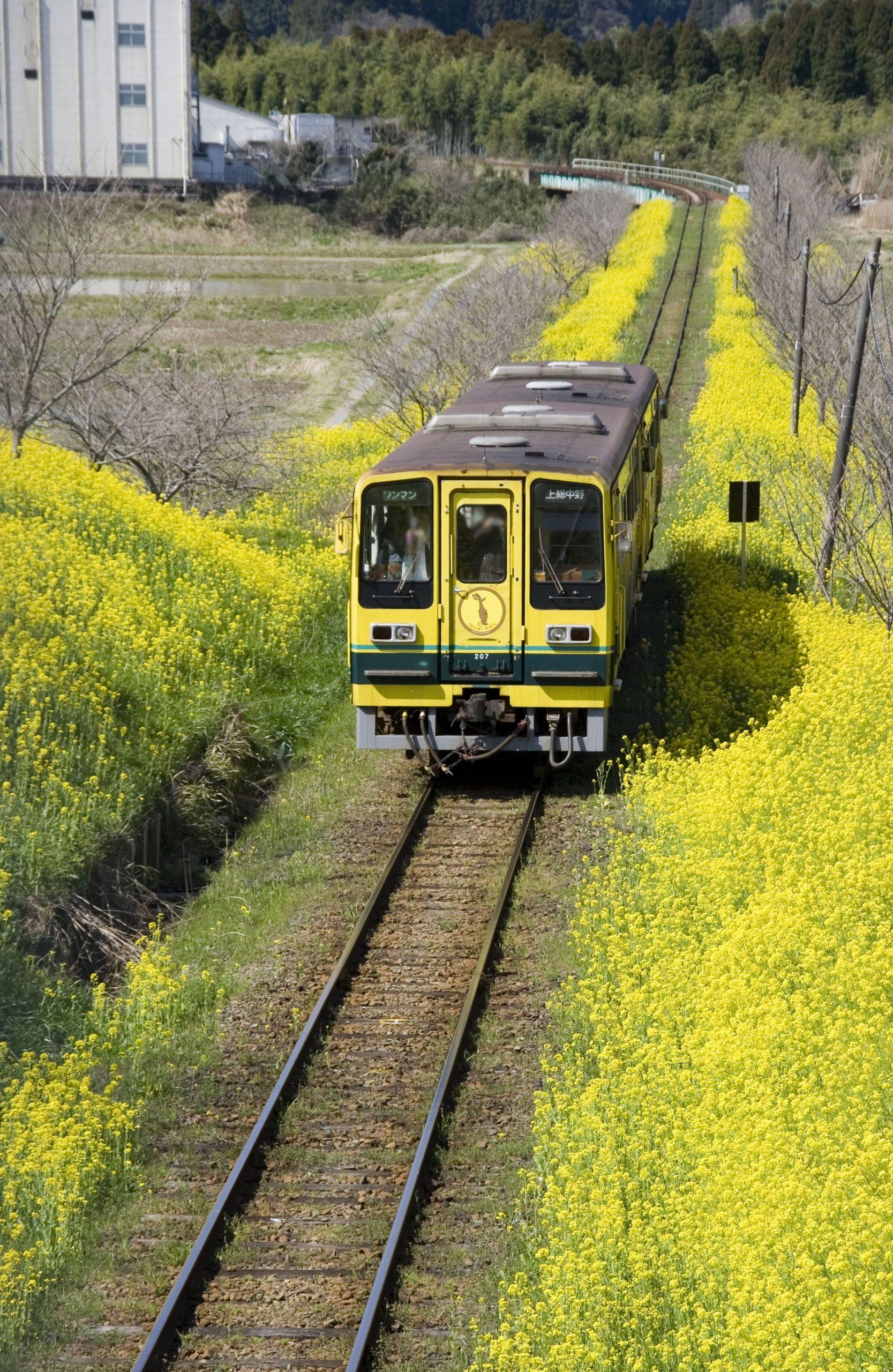 いすみ鉄道の菜の花