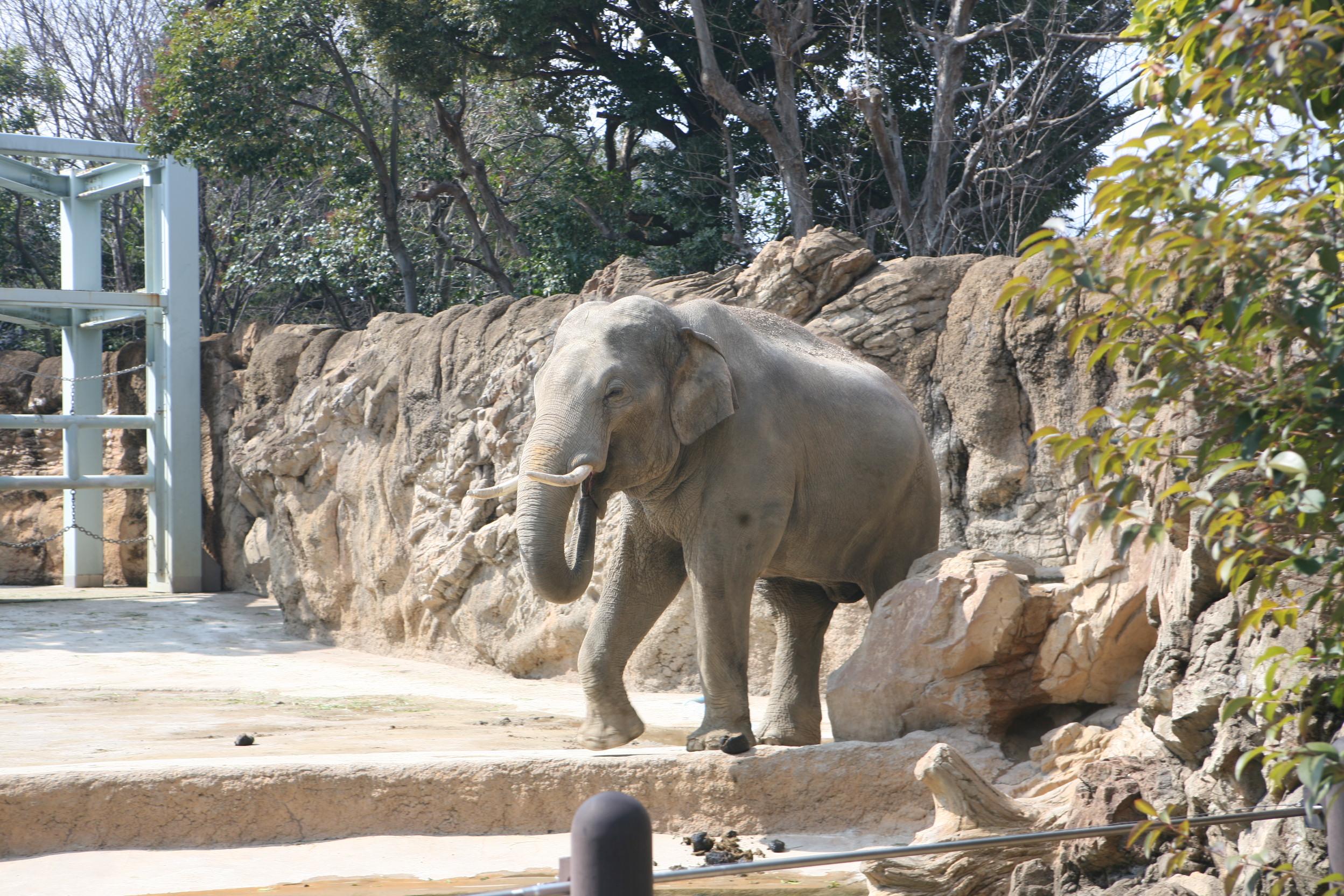 上野動物園のぞうさん