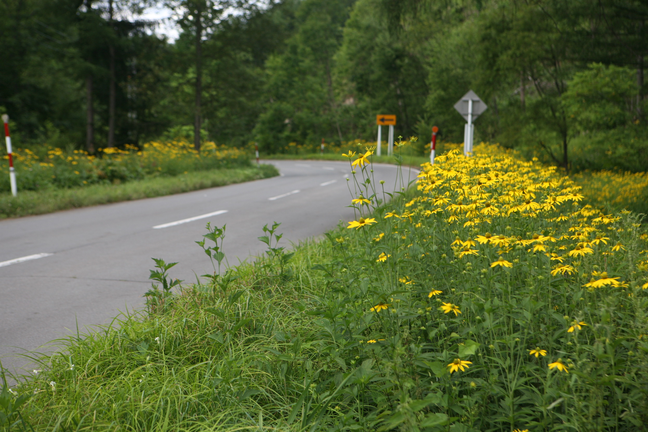 花が咲く道路