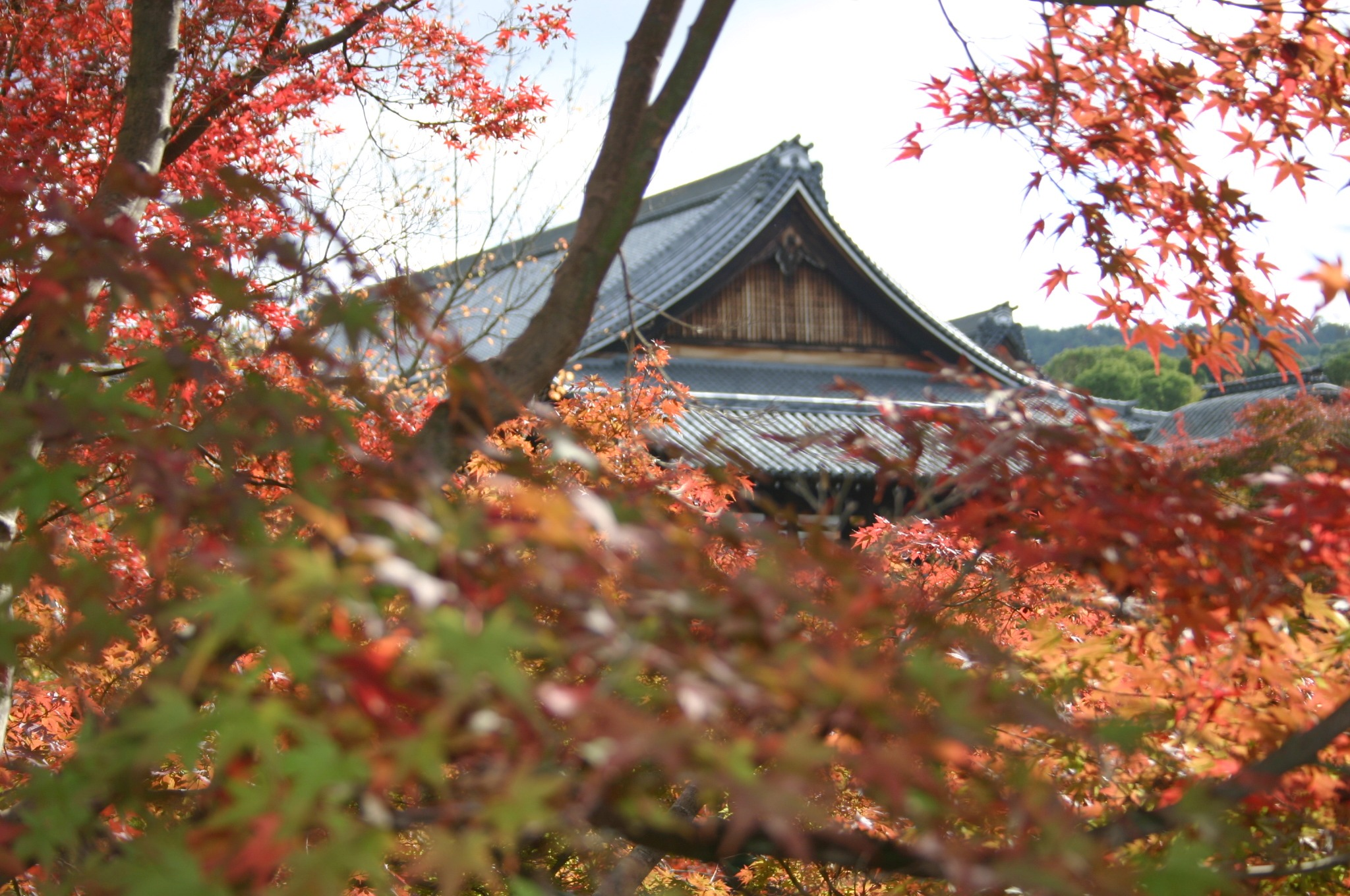 東福寺の屋根