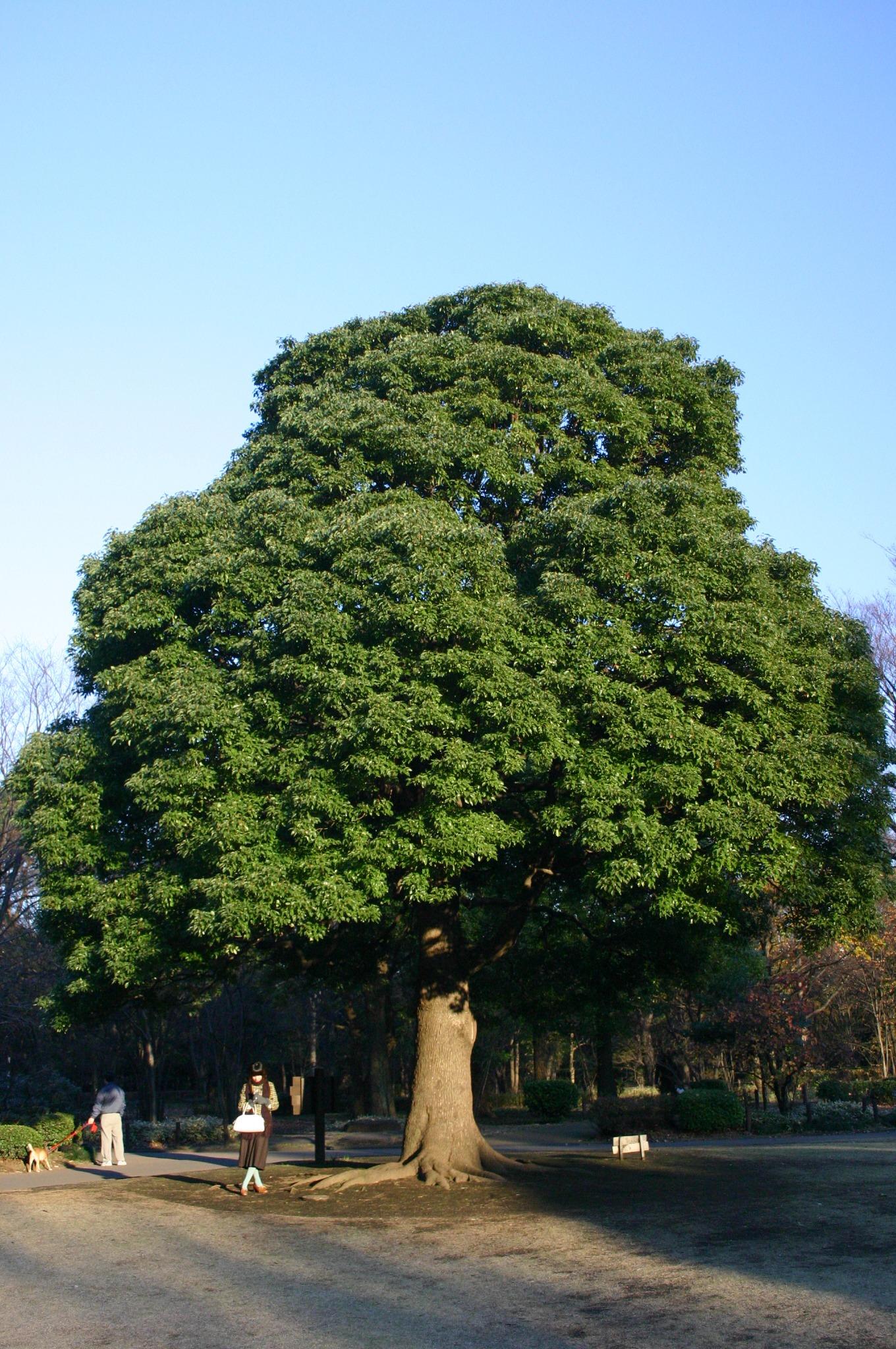 大きな木の下で待ち合わせ