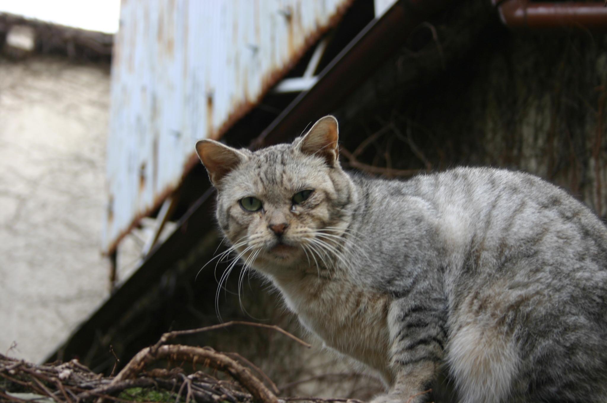 谷中の猫を撮る!