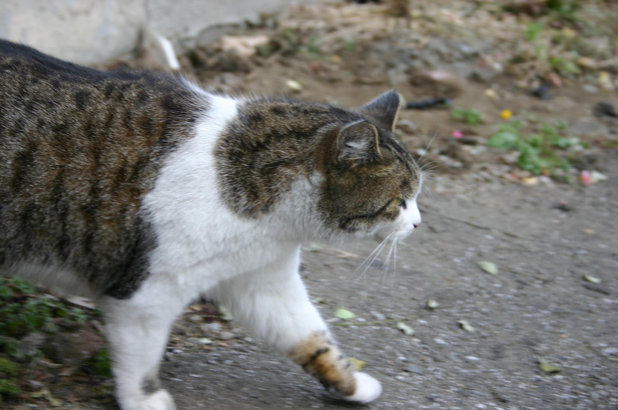 夕焼けだんだんの猫を撮る!