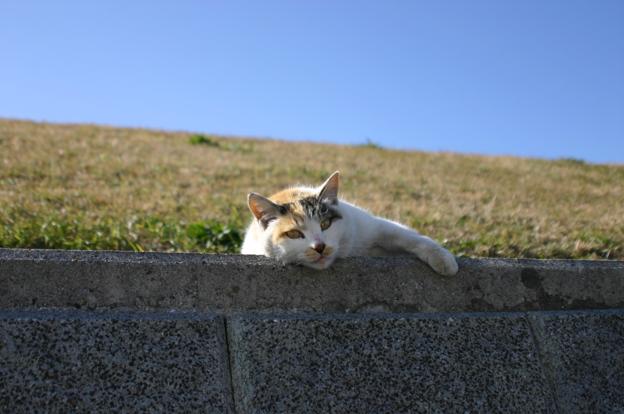 ポーズをとる猫