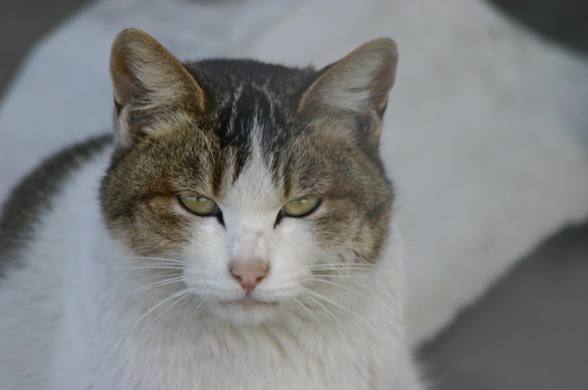 「ん?なんか用???」といいたげな猫