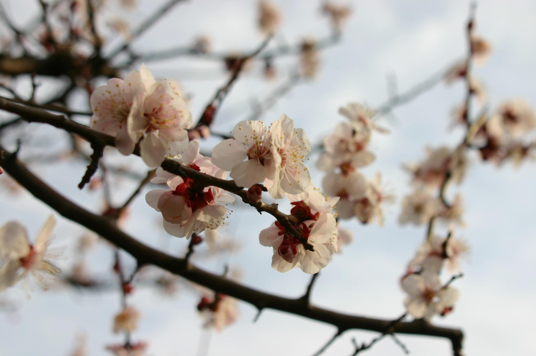 はぁ~ 綺麗だな梅の花って
