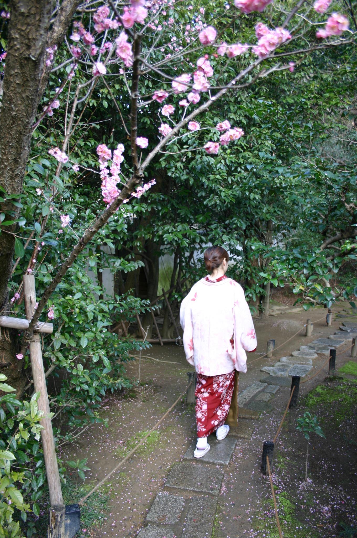 梅の花と着物と京都