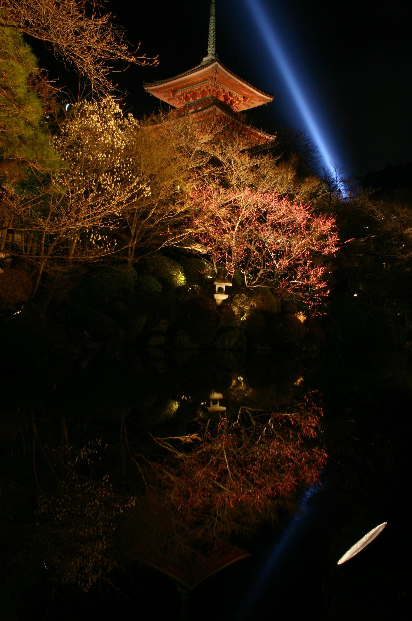 清水寺の池に梅の花
