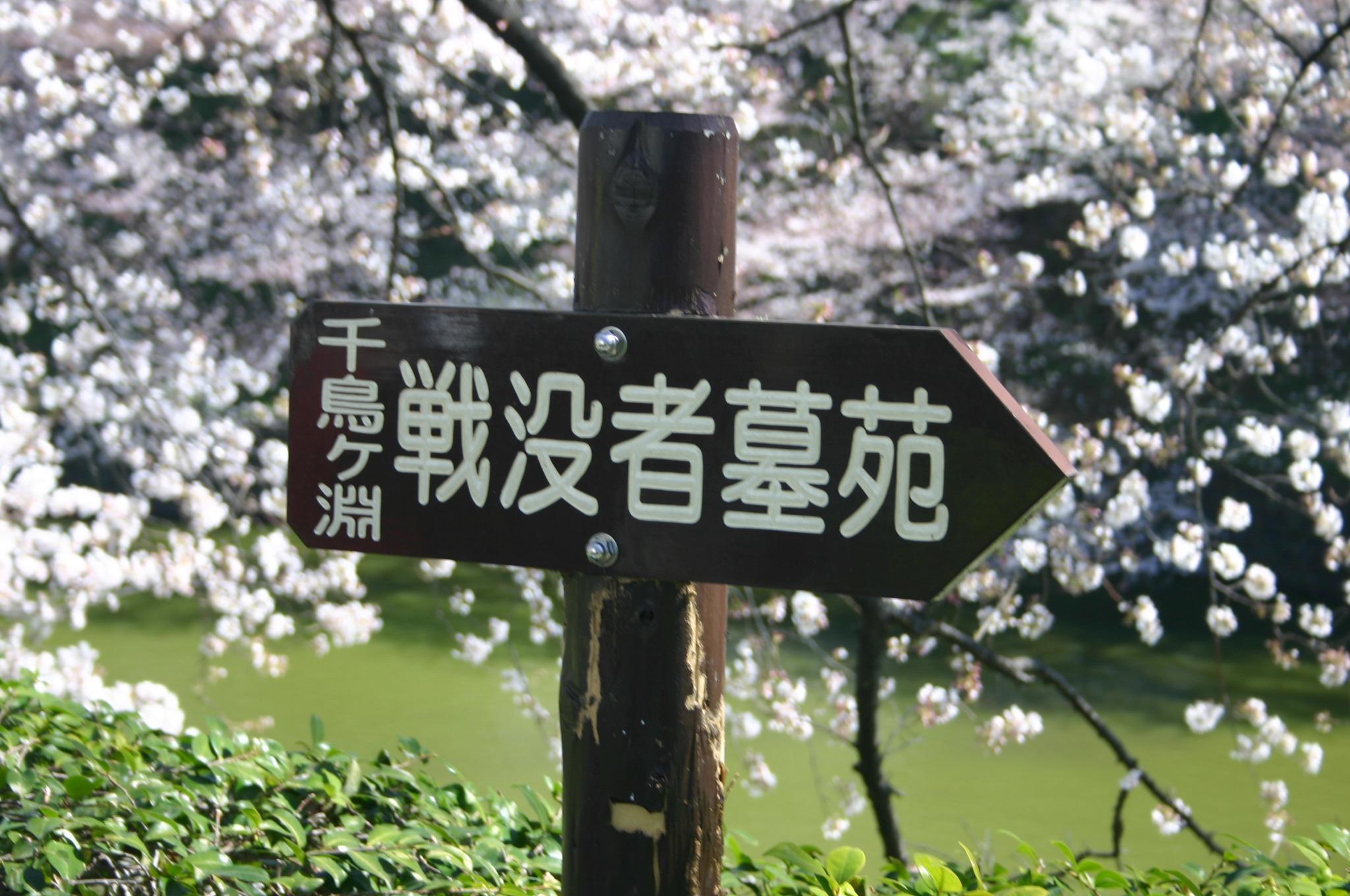 桜とボートを撮影