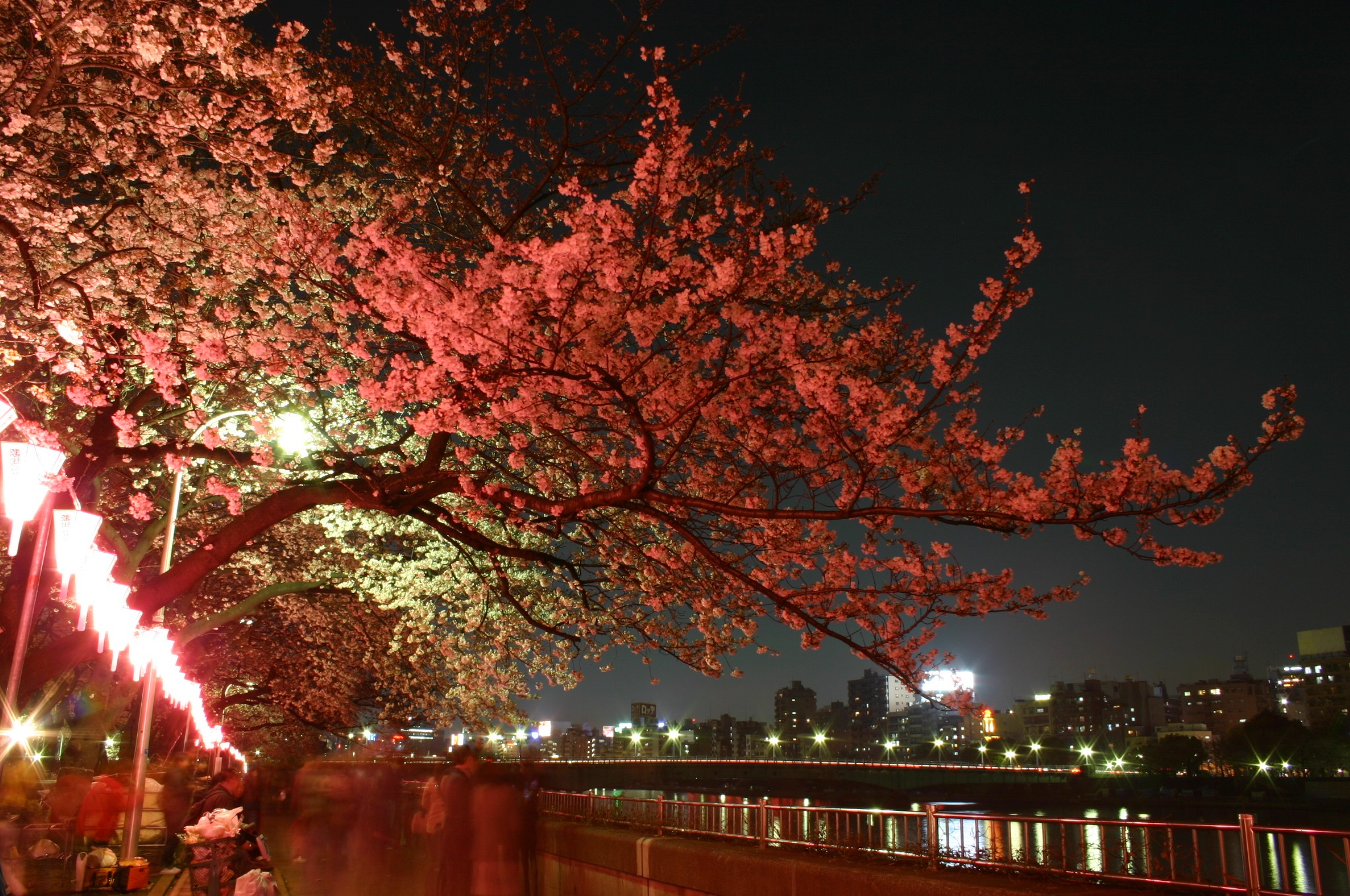 隅田川の夜桜 1