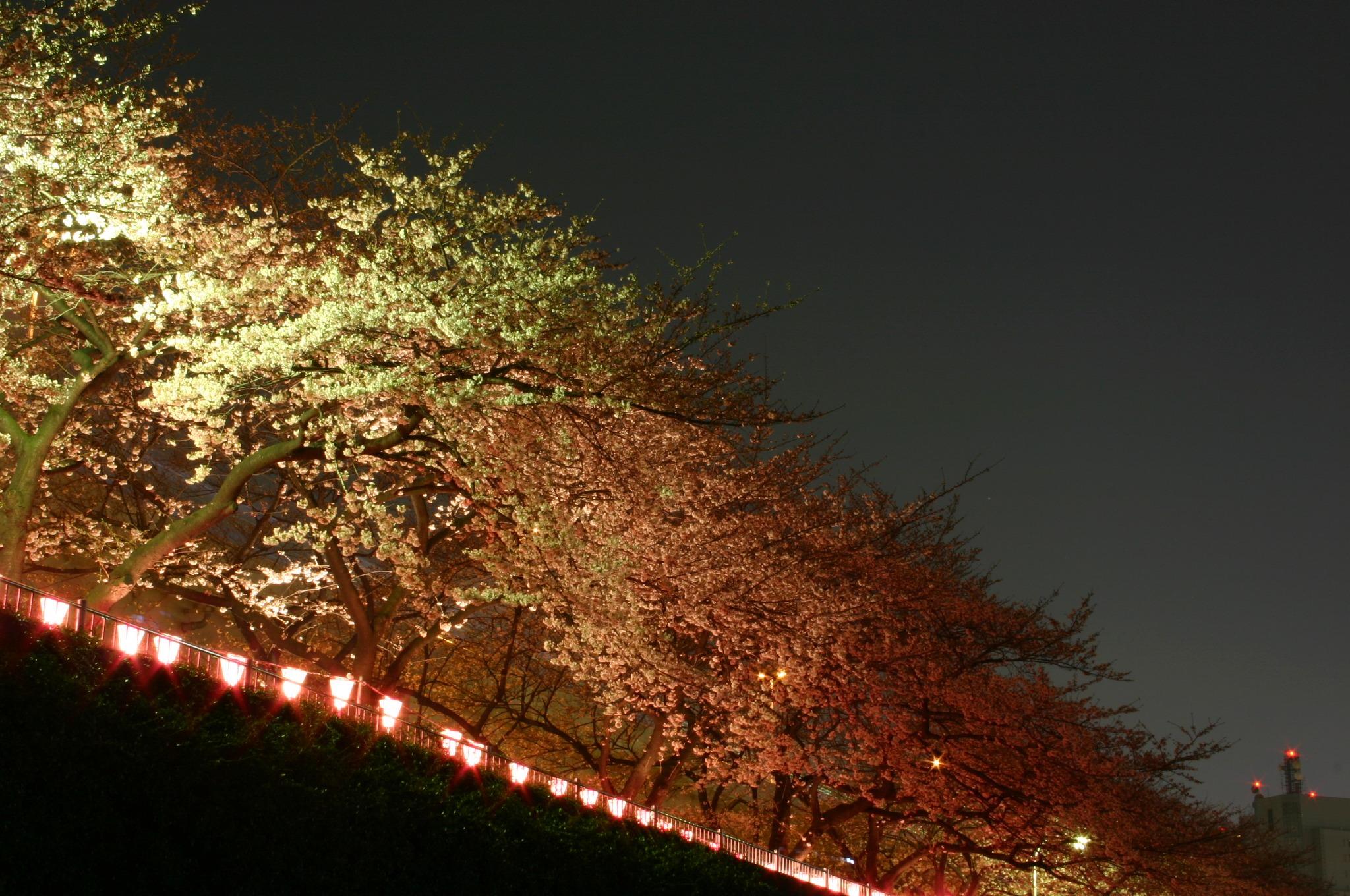 隅田川の夜桜 角度を変えて
