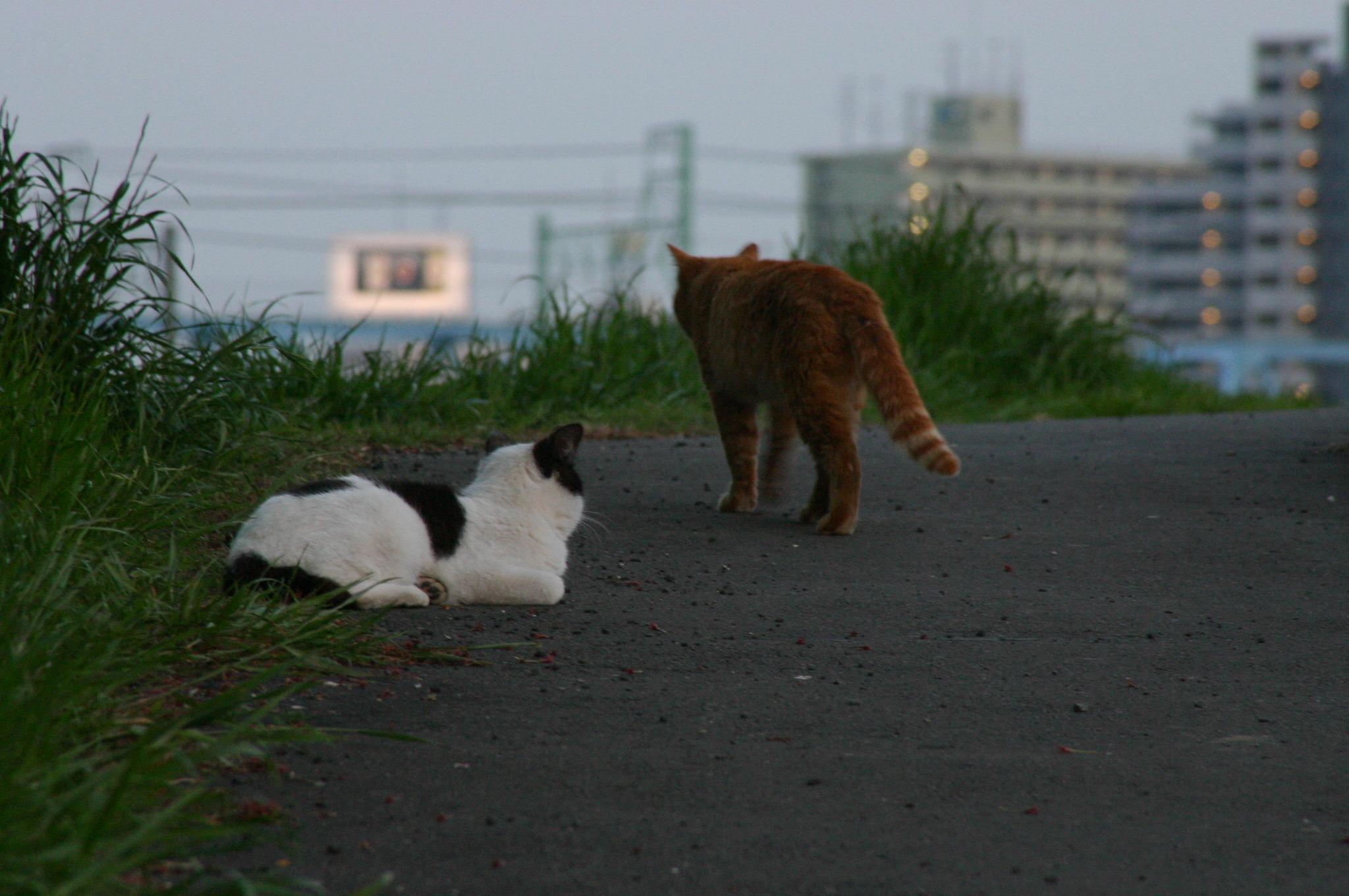 「俺は先に帰るよ」と言いそうな猫