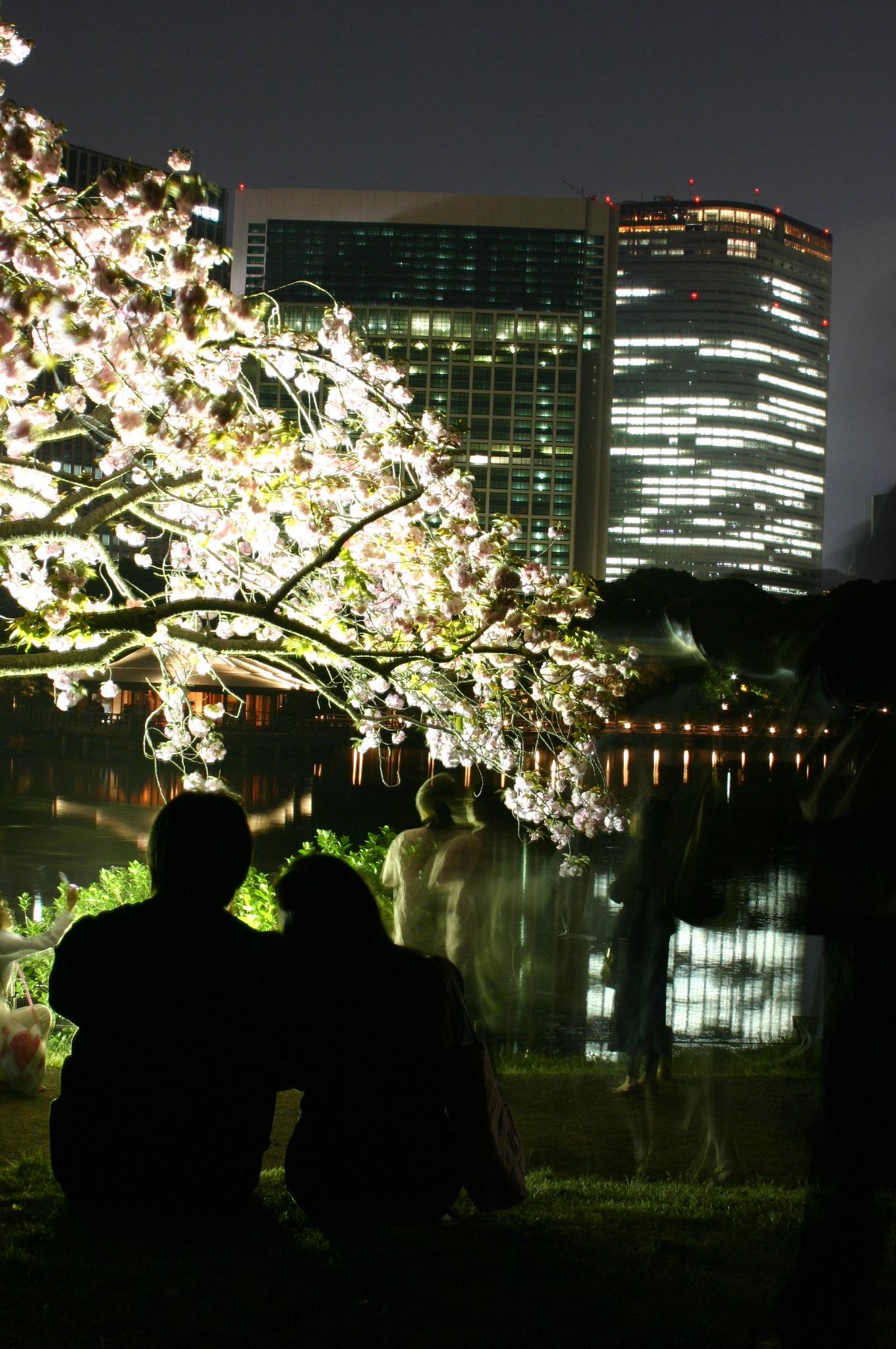 桜を見ながら寄り添う二人