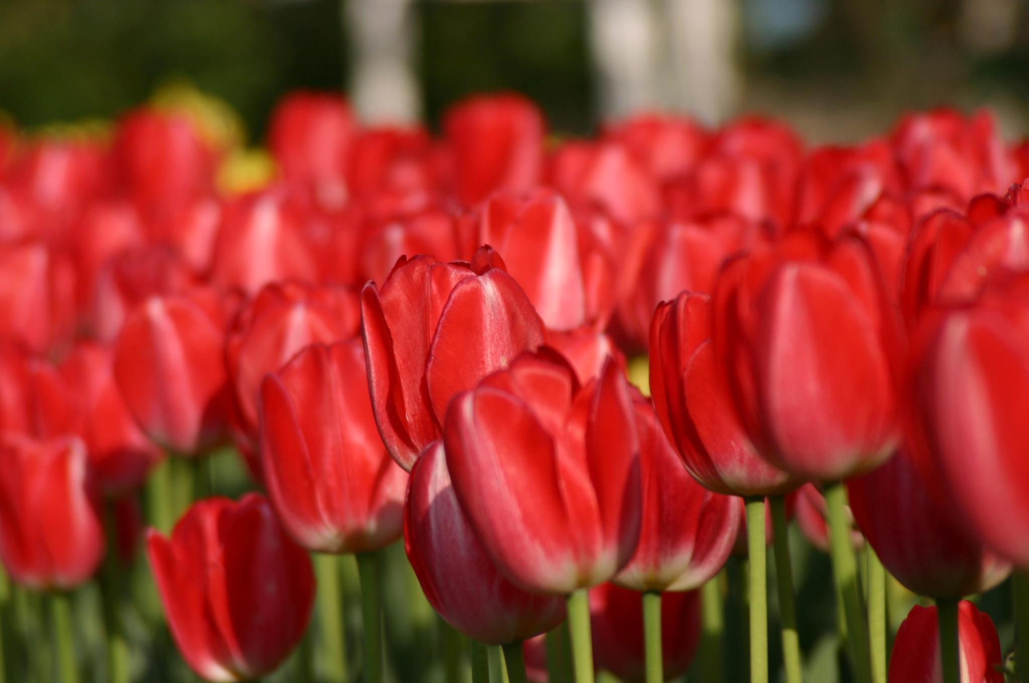 花が綺麗に並んで