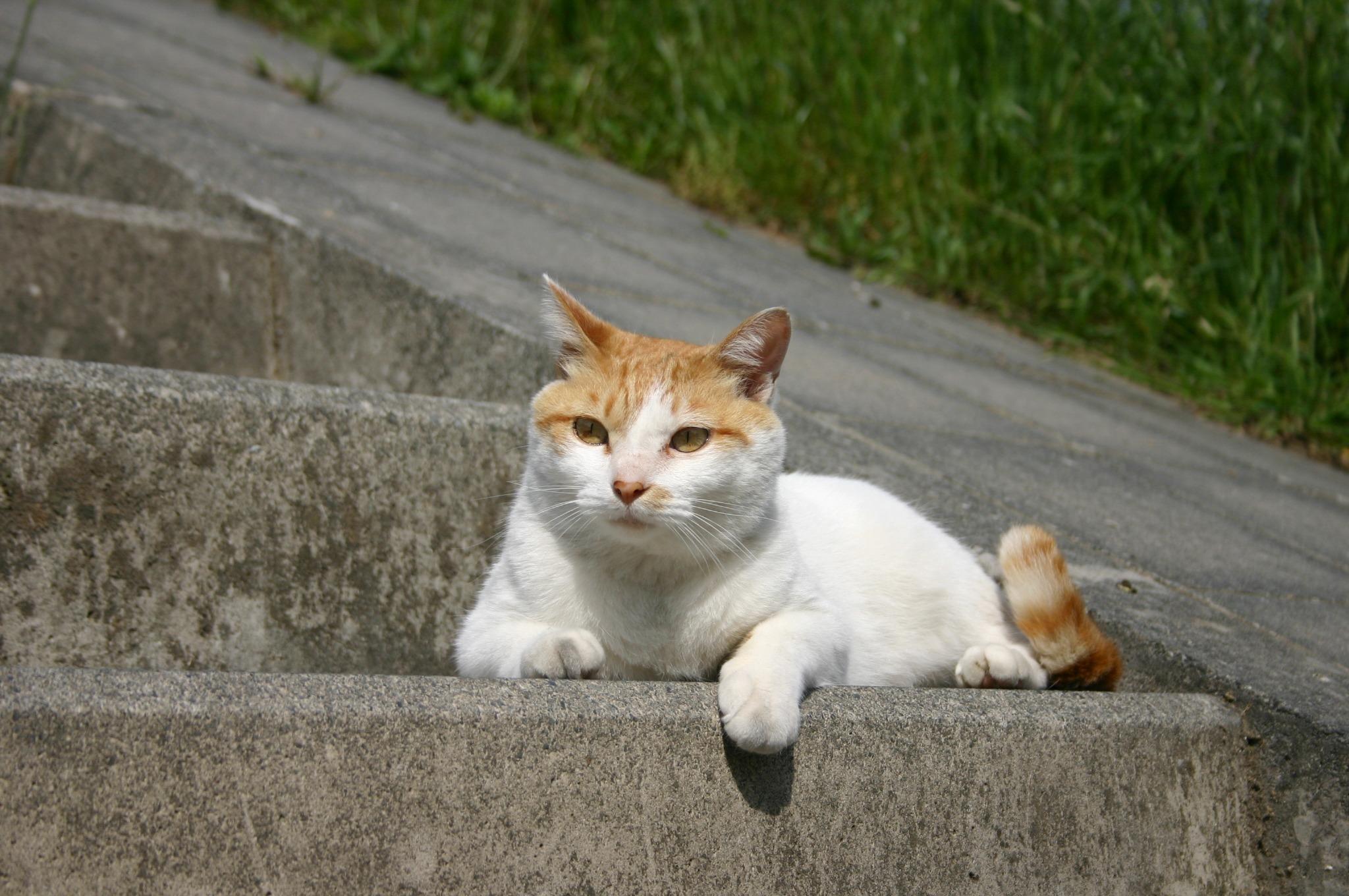 土手で日向ぼっこしている猫