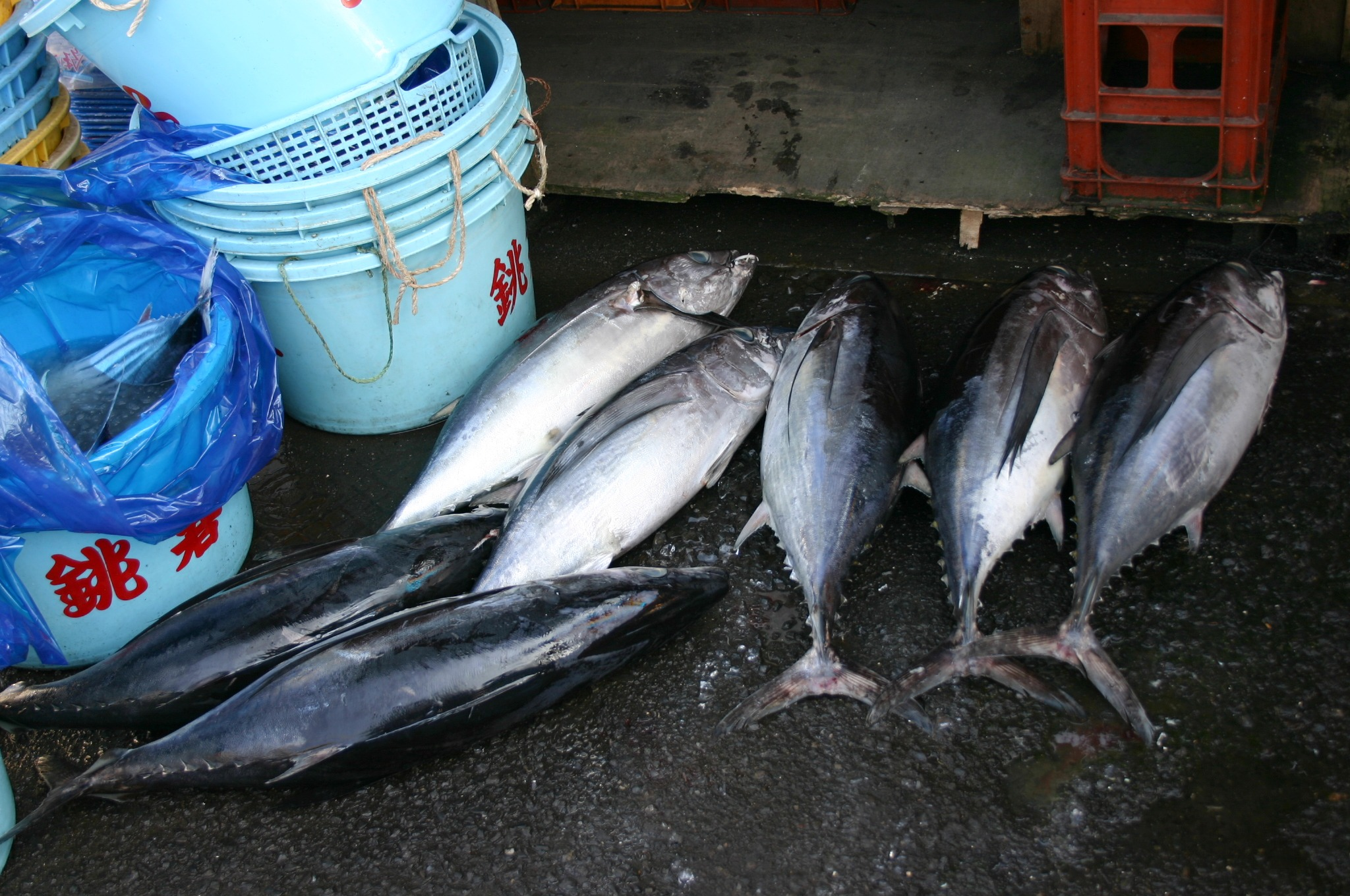 銚子の道路に転がっている魚