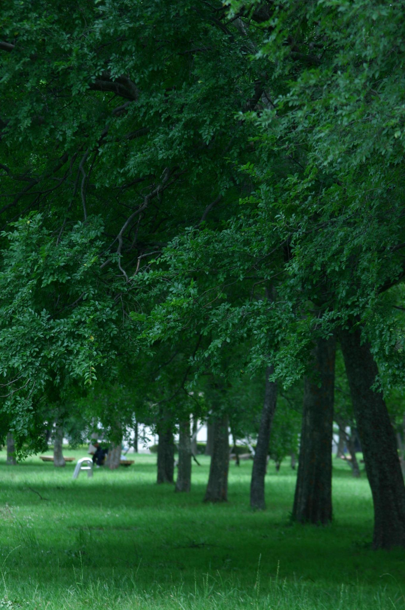 きれいに並んだ木を