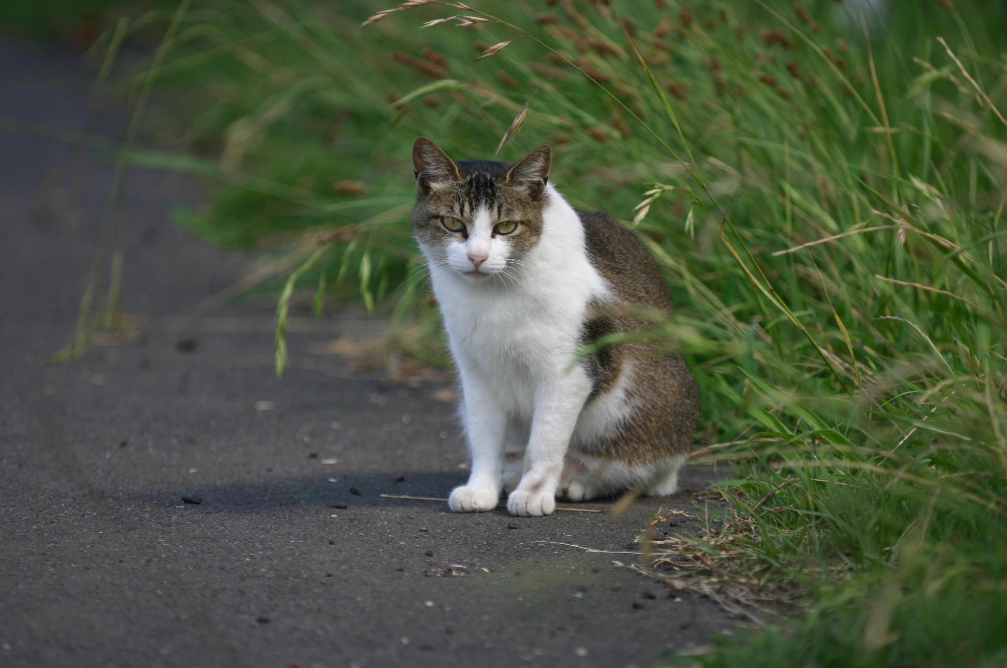 多摩川のノラ猫