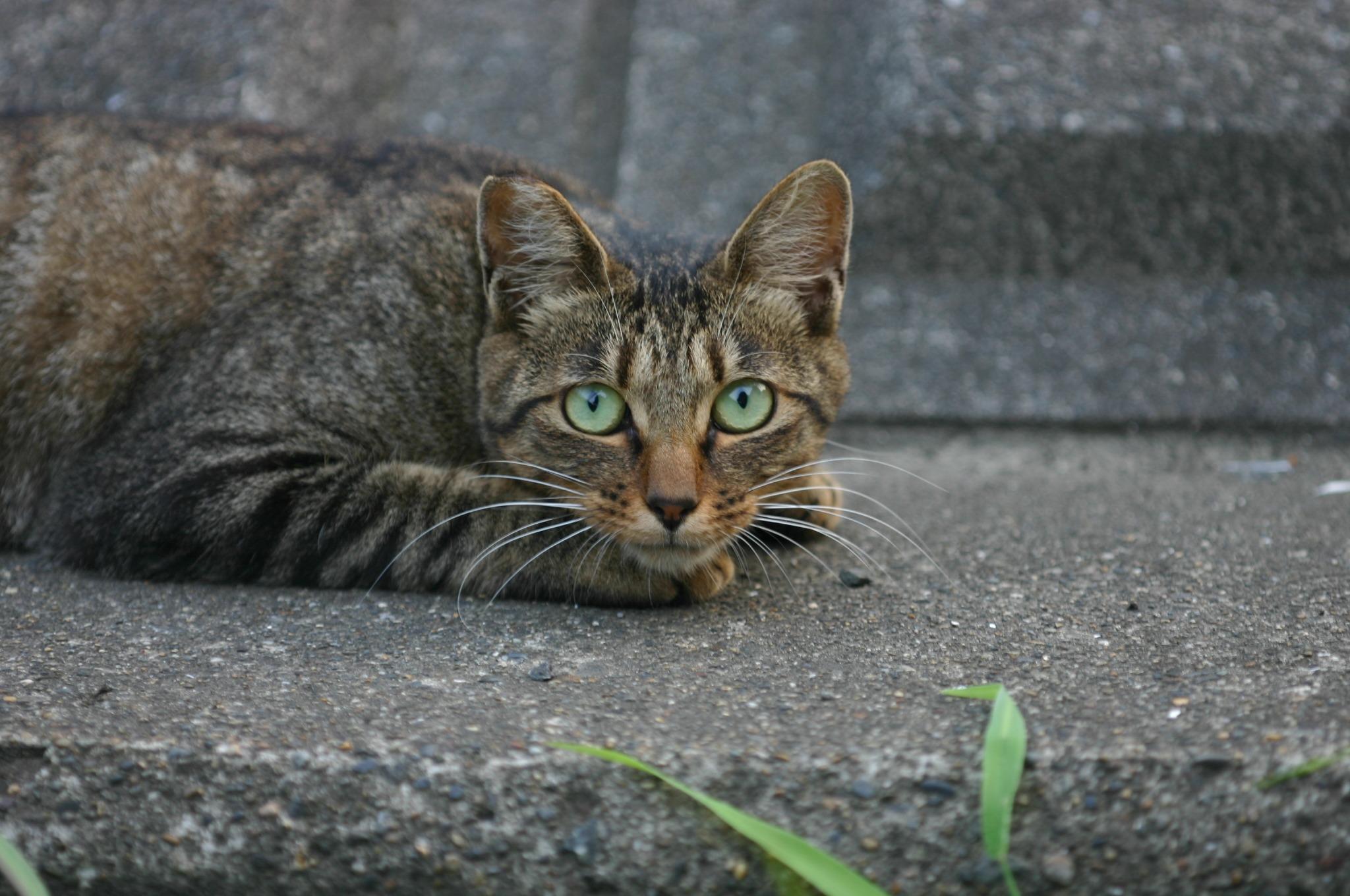 初めて見る土手の猫