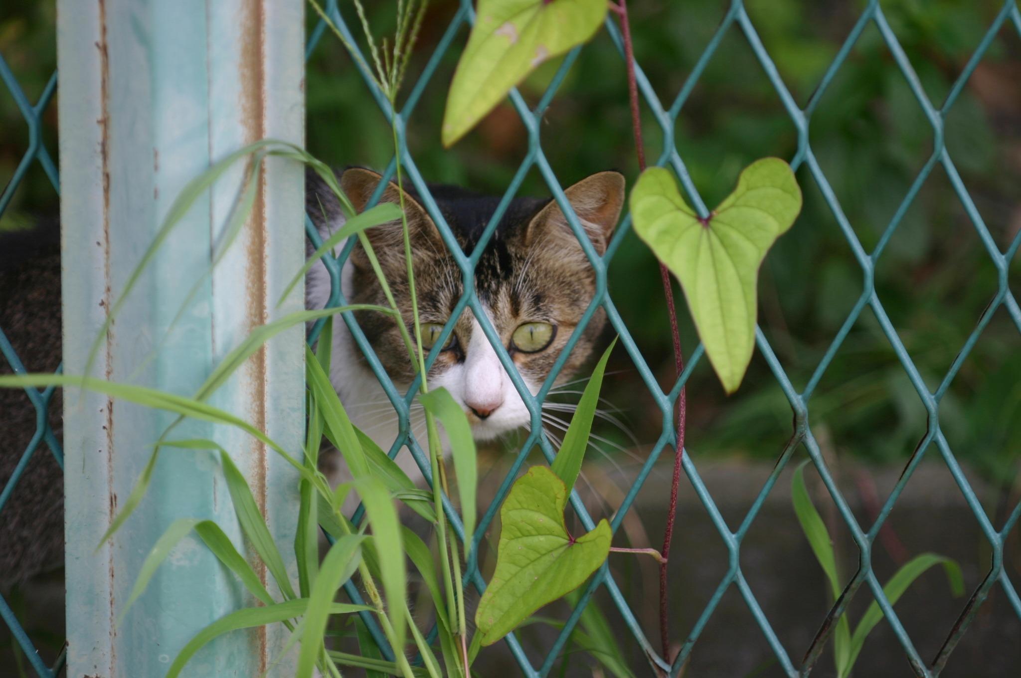柵の向こう側にいる猫