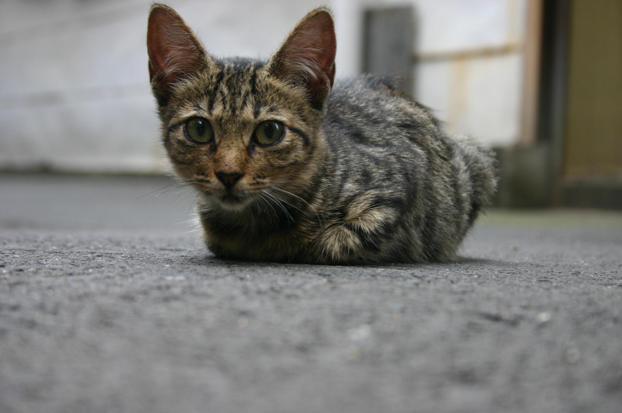 町屋にいた子猫