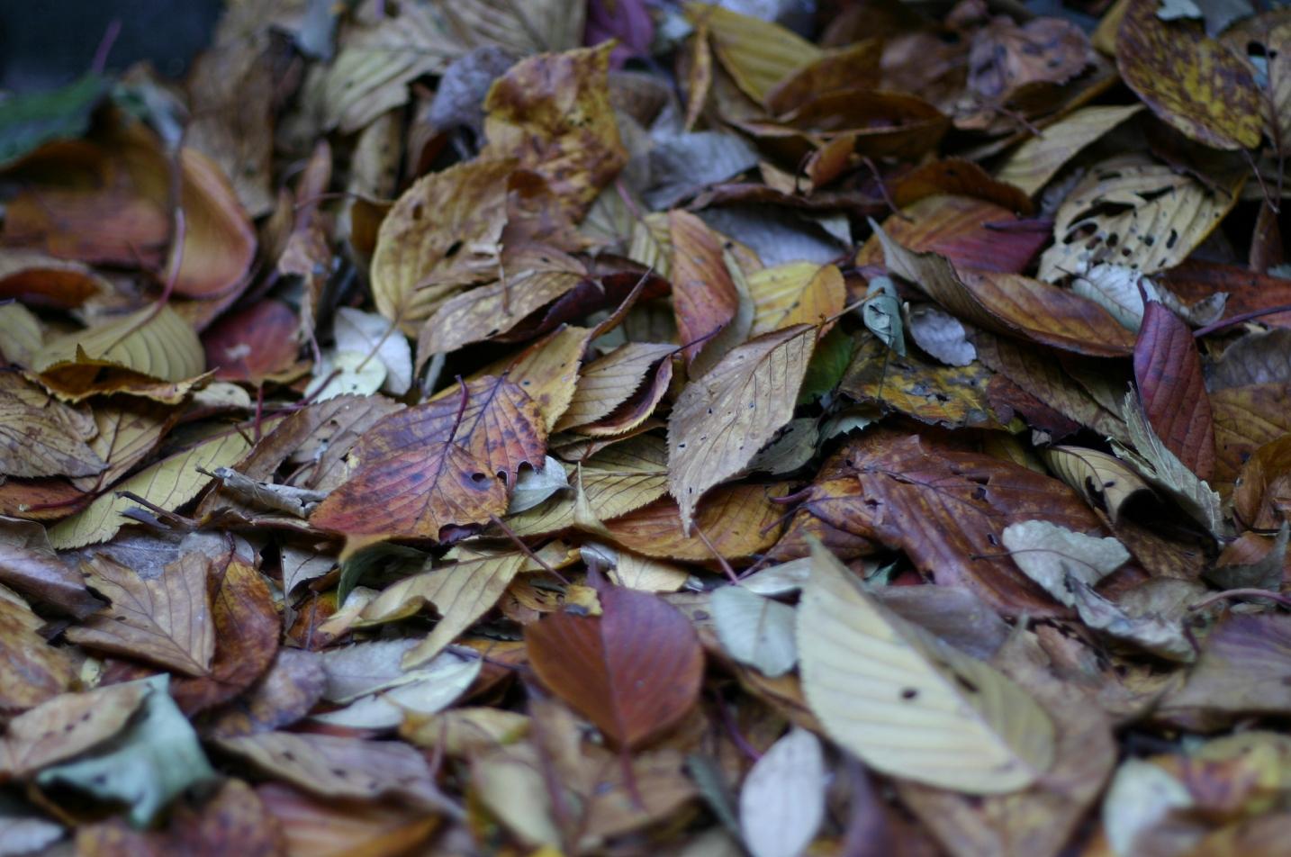 散る落ち葉