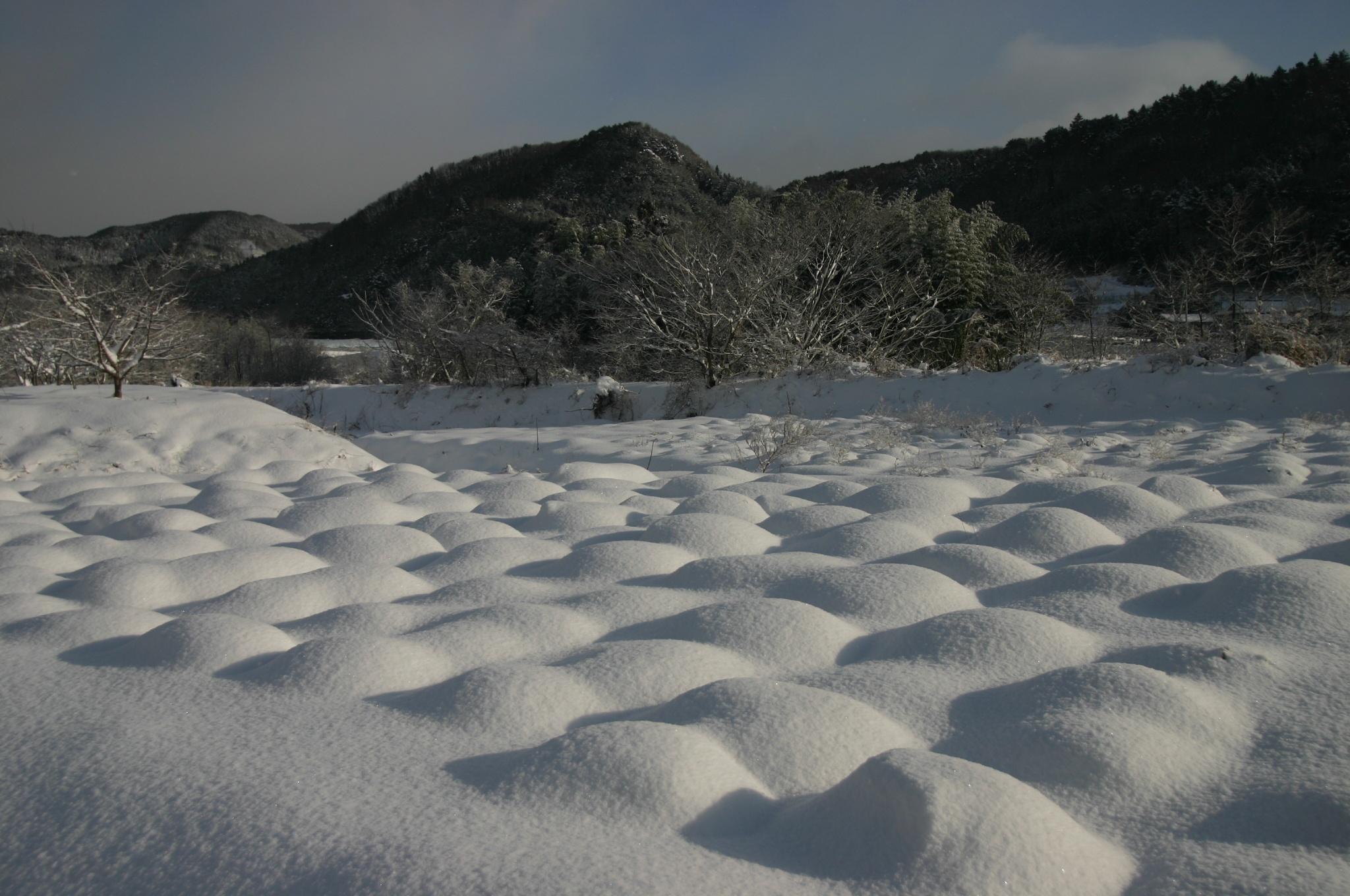 畑と思われる場所に積もった雪