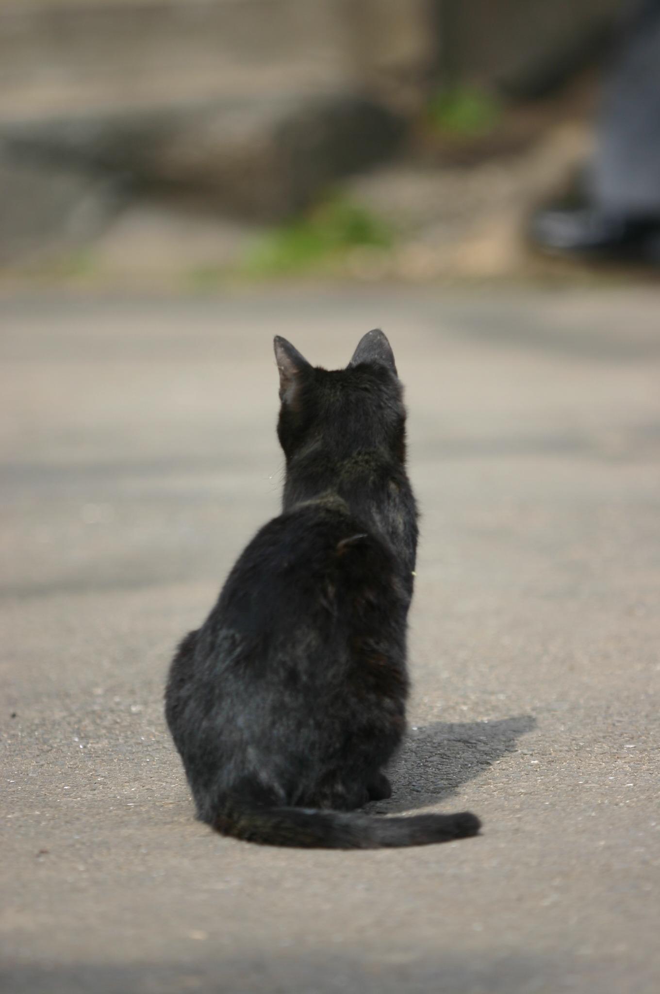 黒猫は見た!