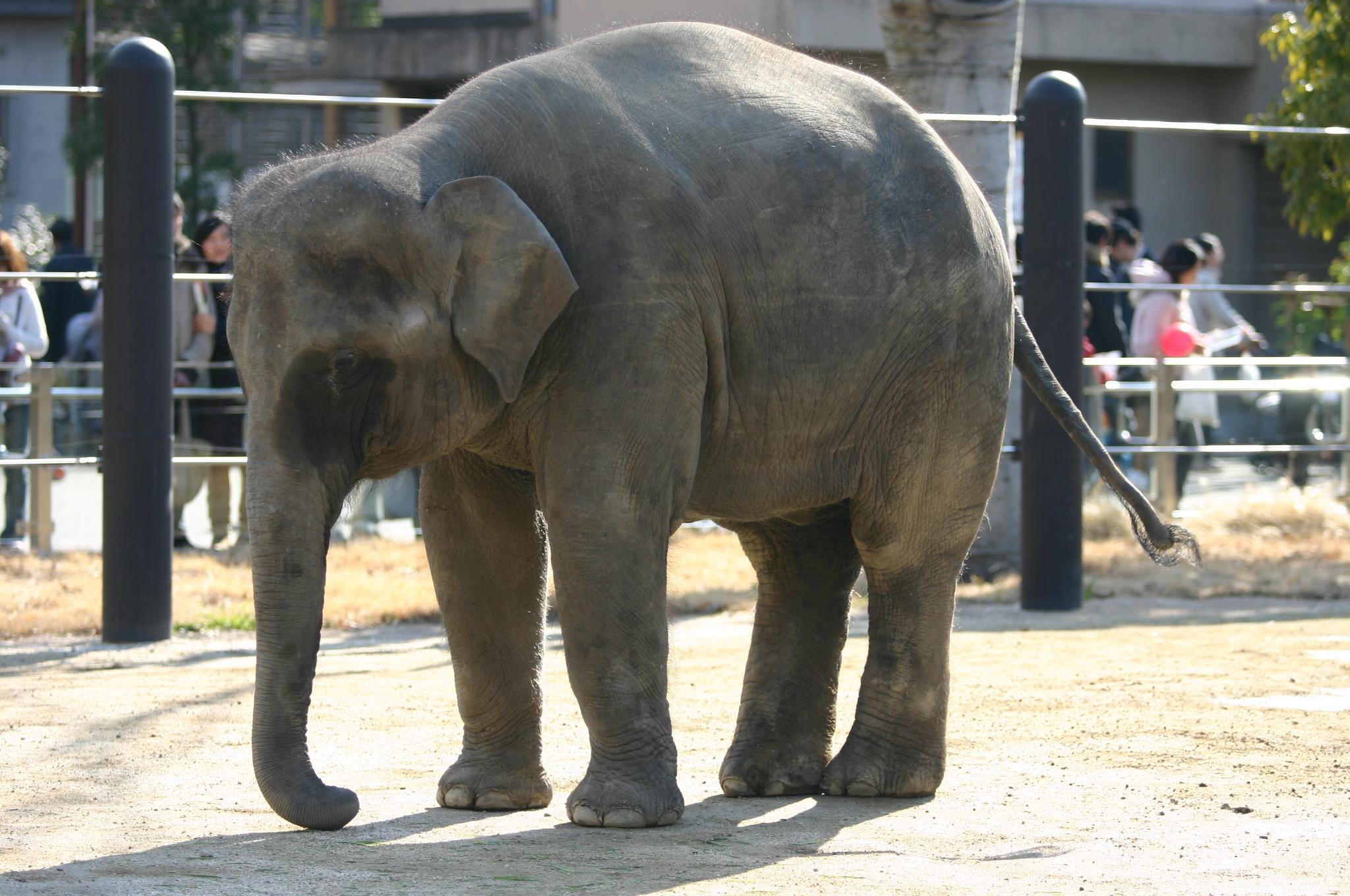 上野動物公園の象さん