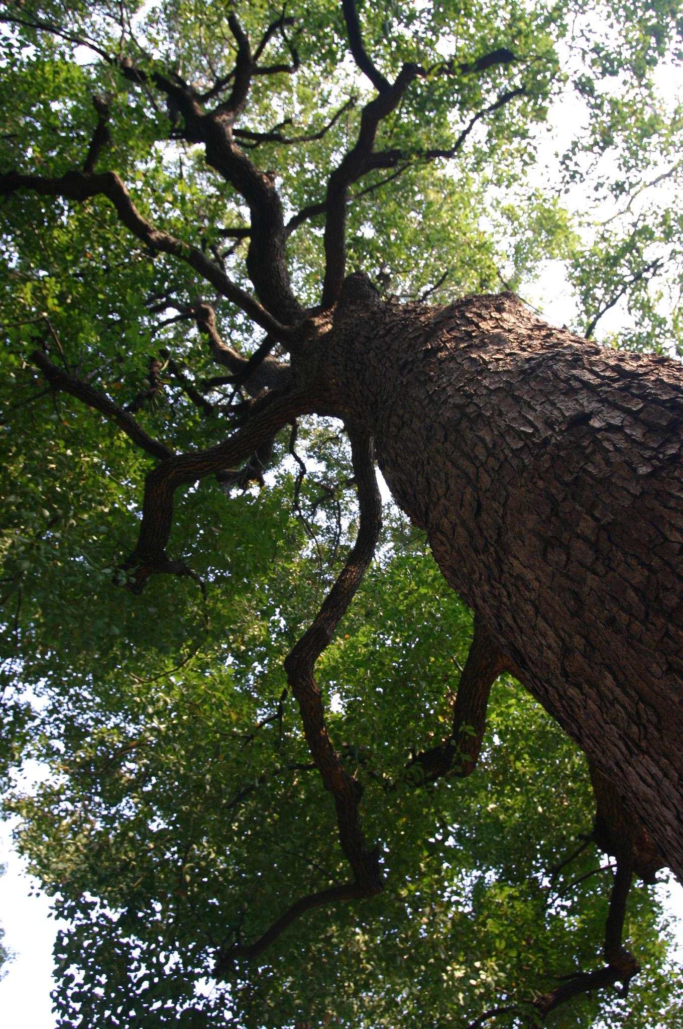 力みなぎる木