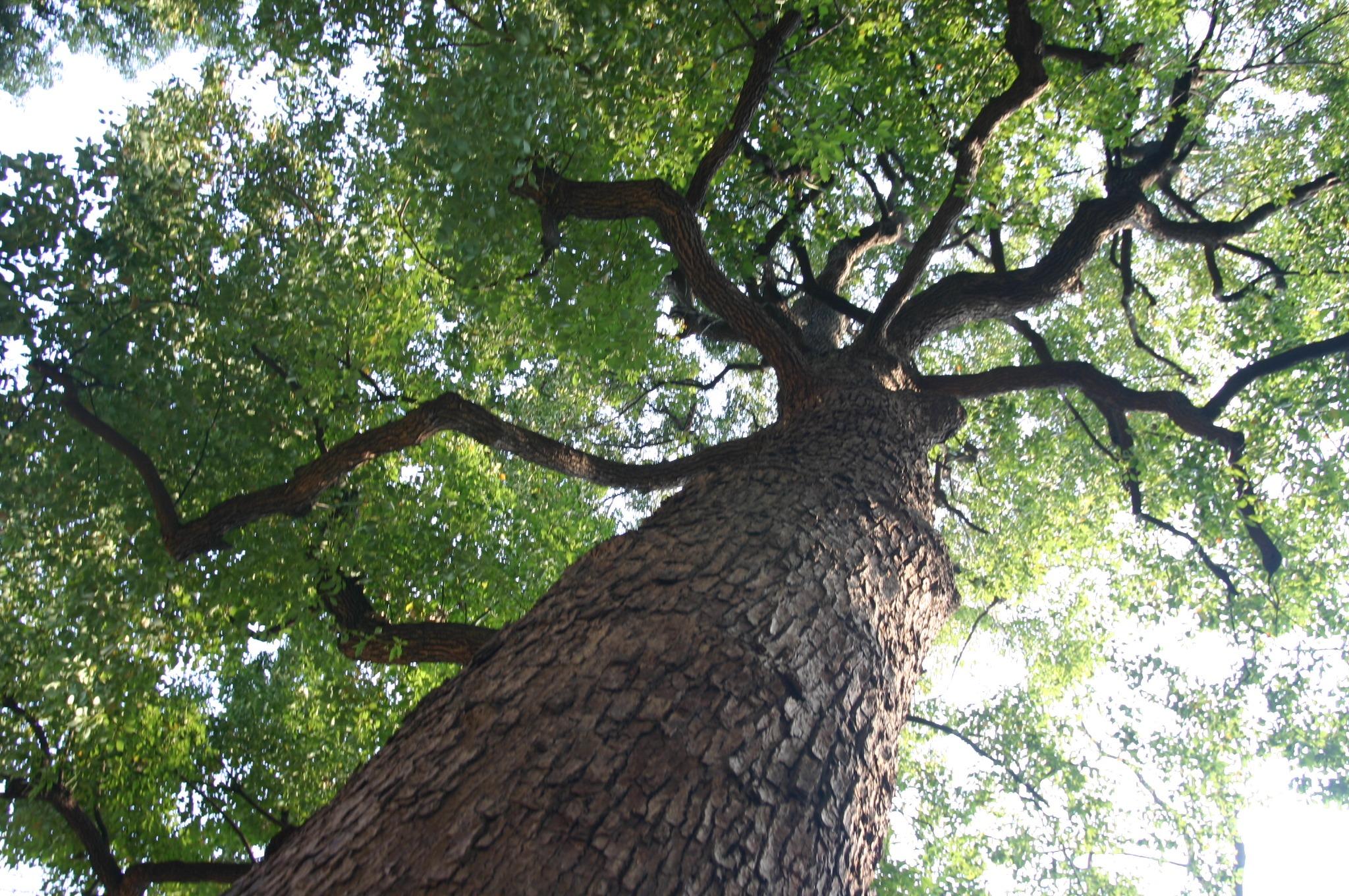 木の枝からもれる木漏れ日