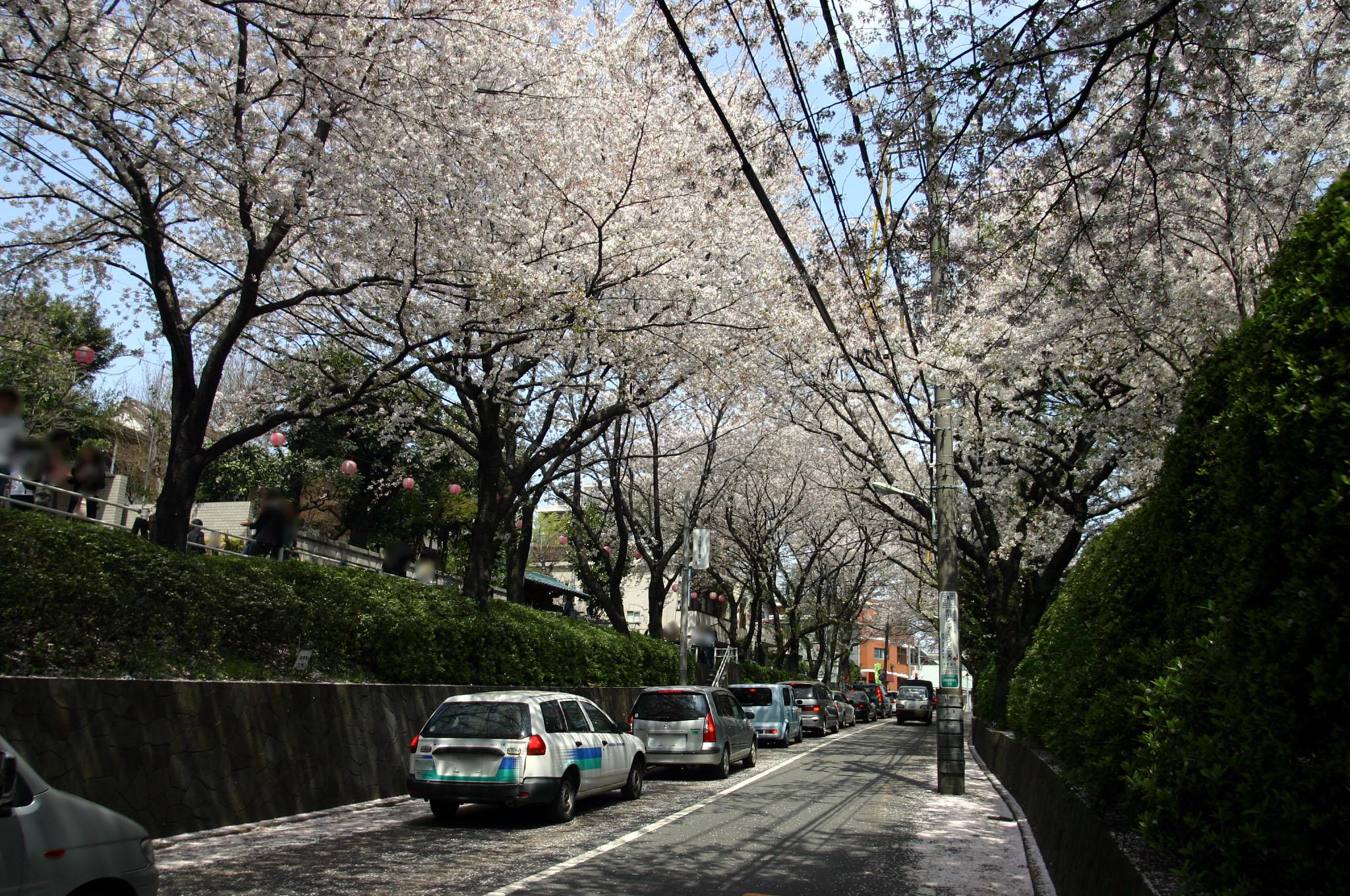 さくら坂の桜並木