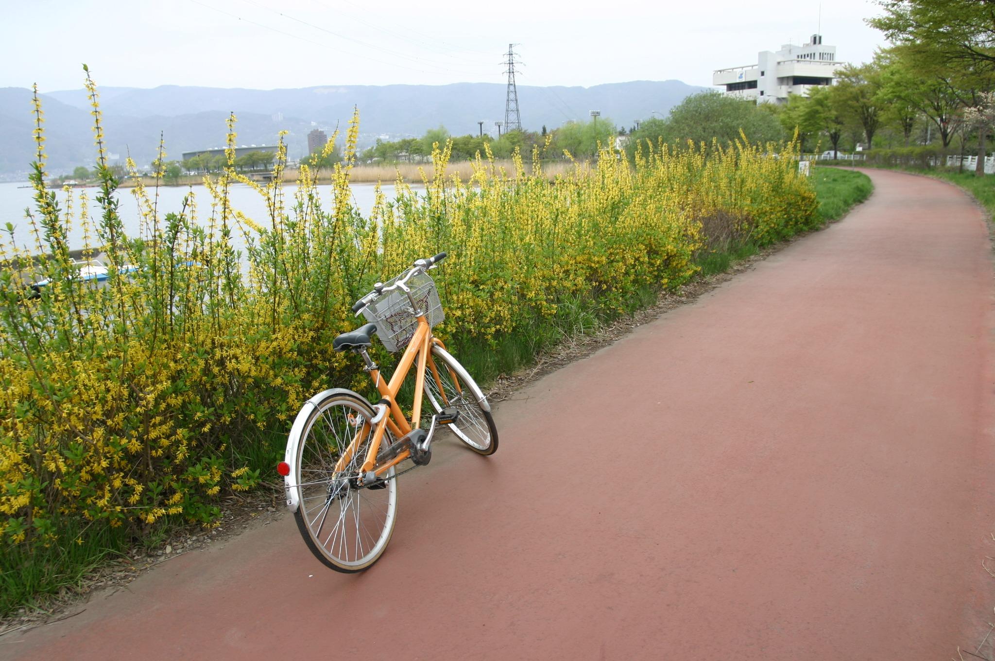 自転車に乗ってサイクリングロードを