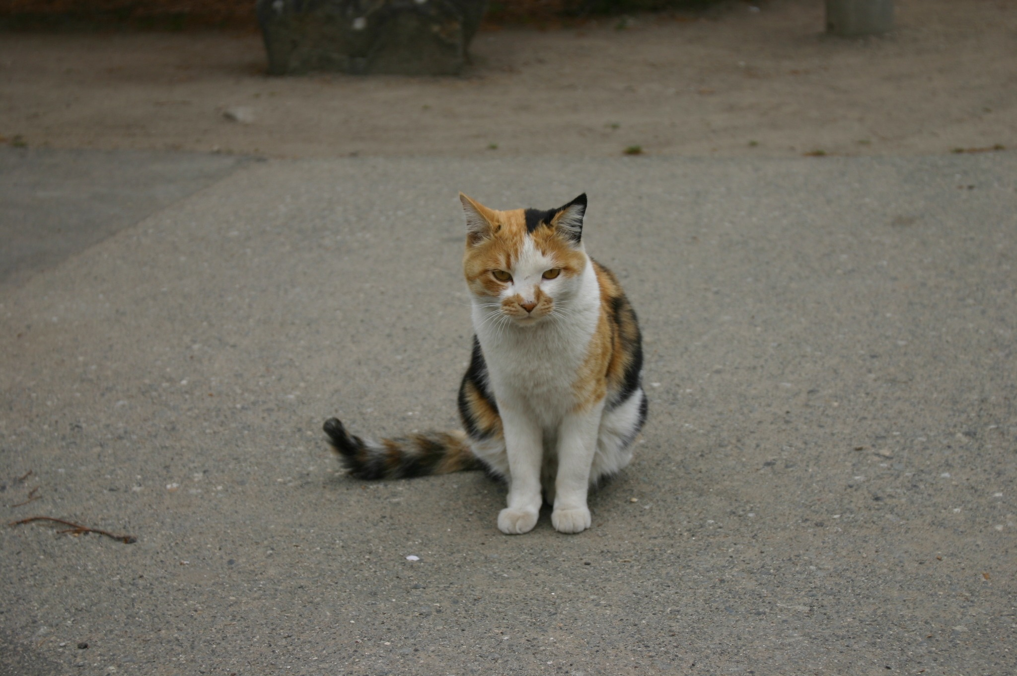 高島公園にいたネコ