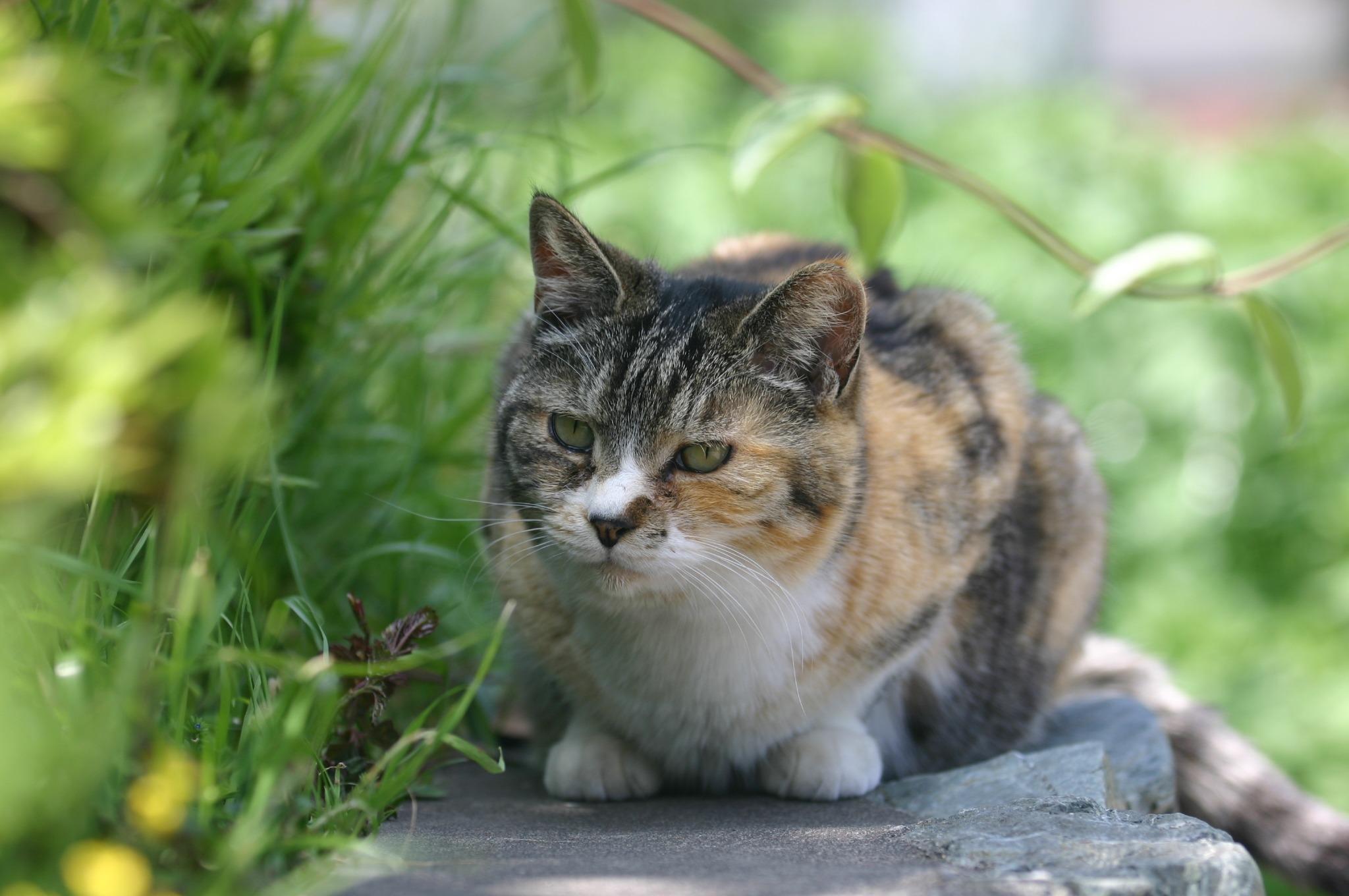 猫さん、正面から失礼します