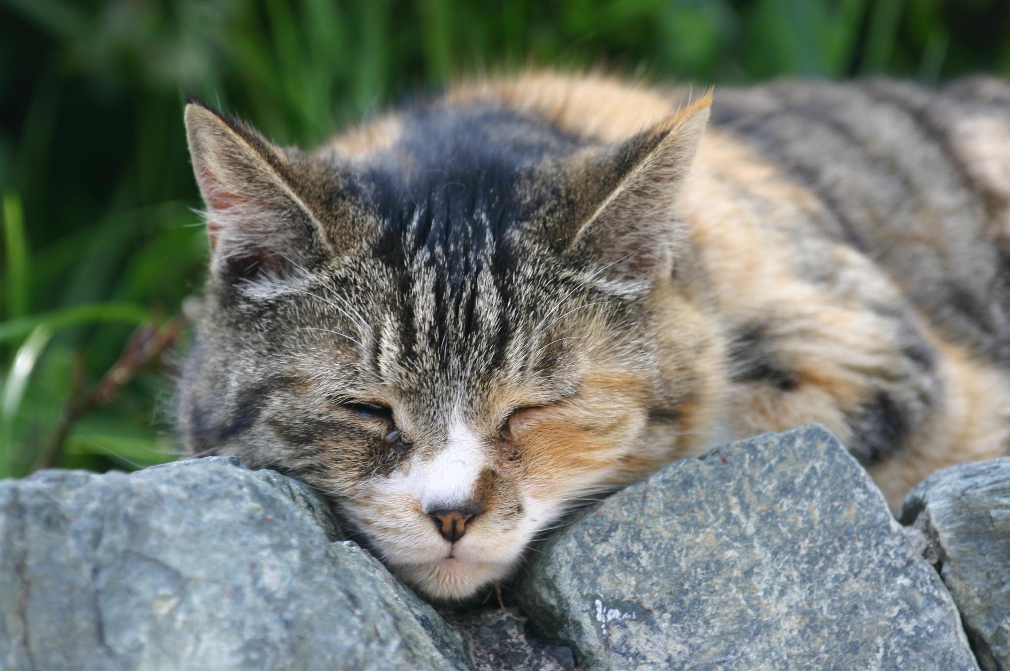 お休み中の猫