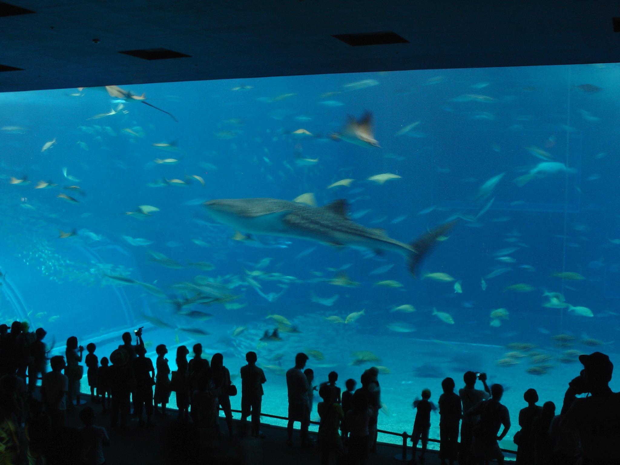 沖縄「美ら海水族館」黒潮の海の写真