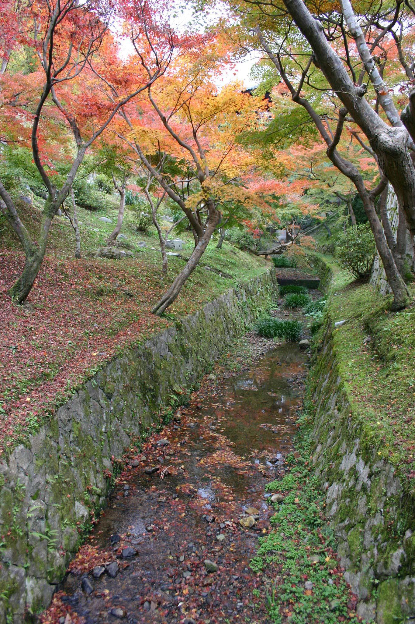 東福寺の小川と紅葉