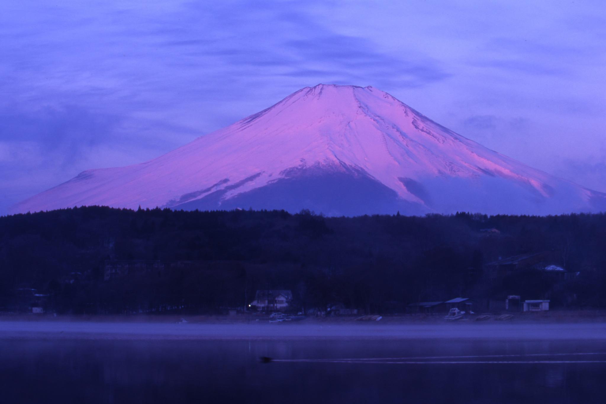 カモが泳いでいる山中湖と富士山